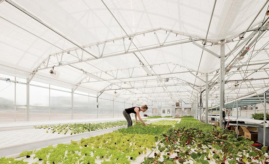 Dahlia01-Greenhouse.jpg