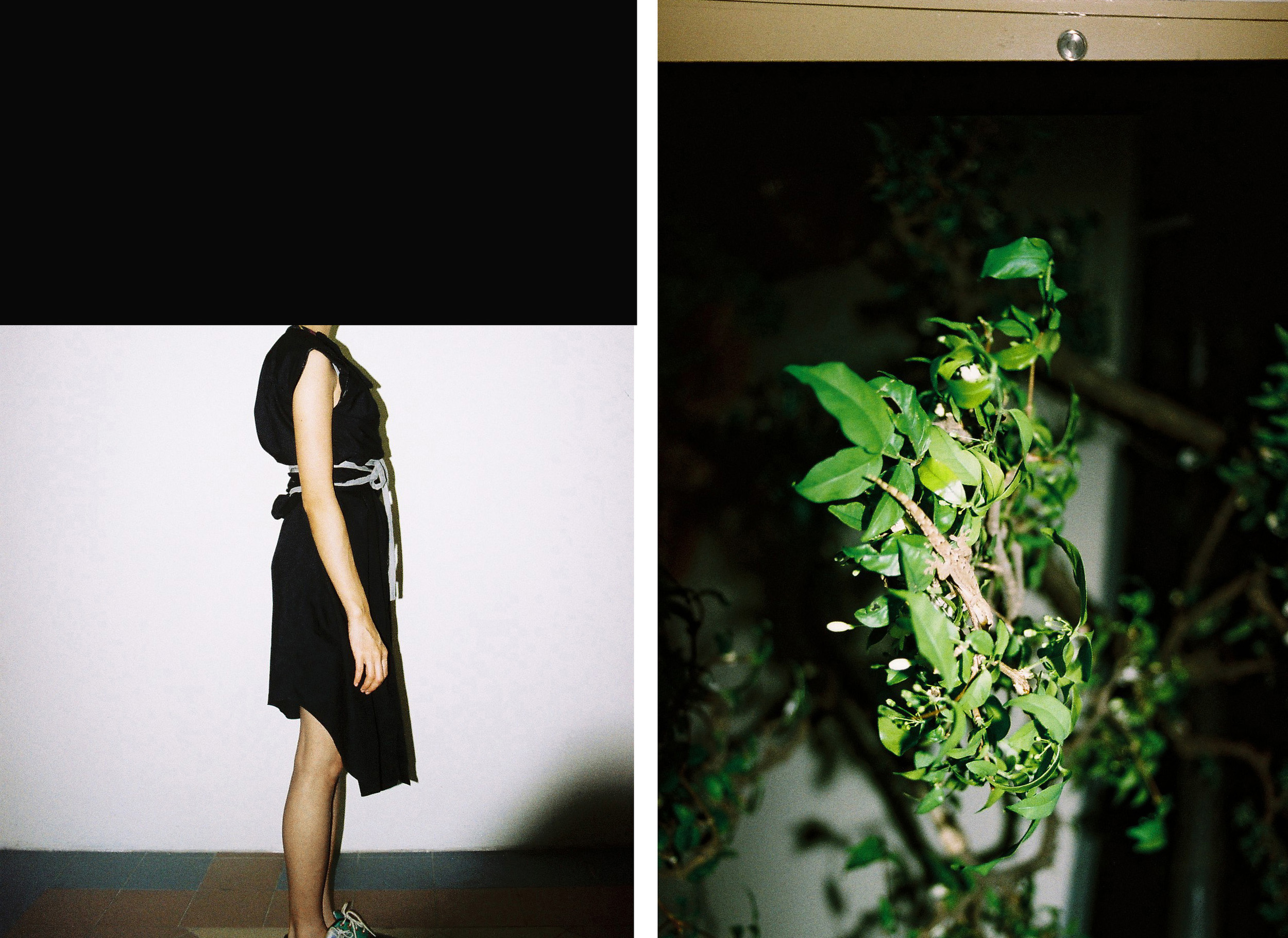 black dress lizard plant copy.jpg