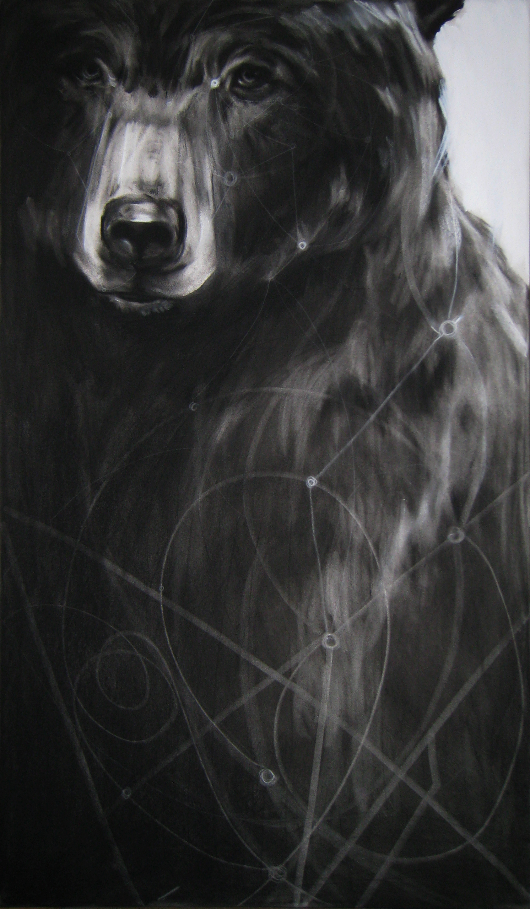 """Circuit Bear, 2012  Charcoal and Acrylic on stretched paper  28x48"""""""