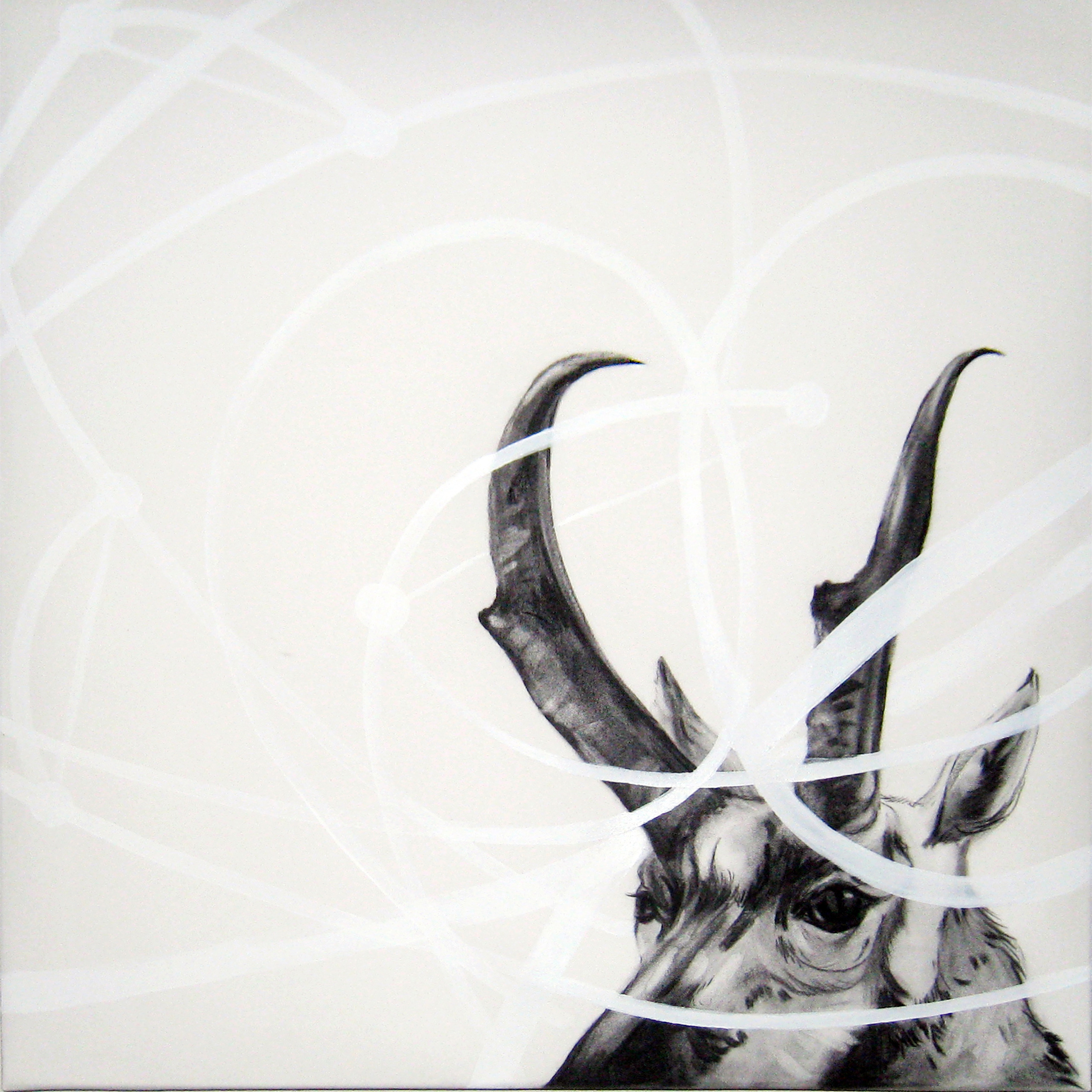 """Intracircuit (Pronghorn), 2013  Charcoal and Acrylic on stretched paper  24x24"""""""