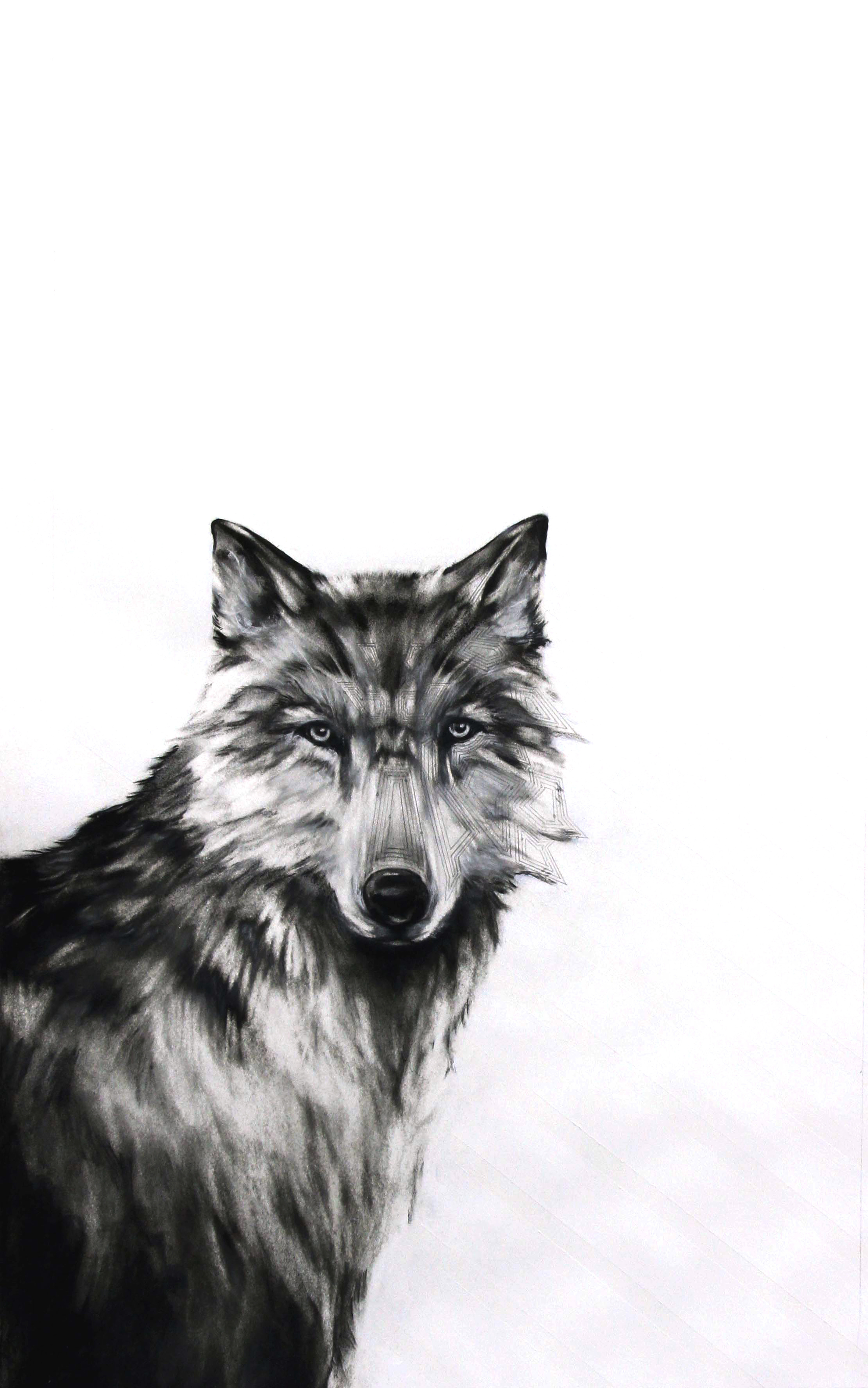"""Circuit Wolf, 2012  Charcoal and Acrylic on stretched paper  28x48"""""""