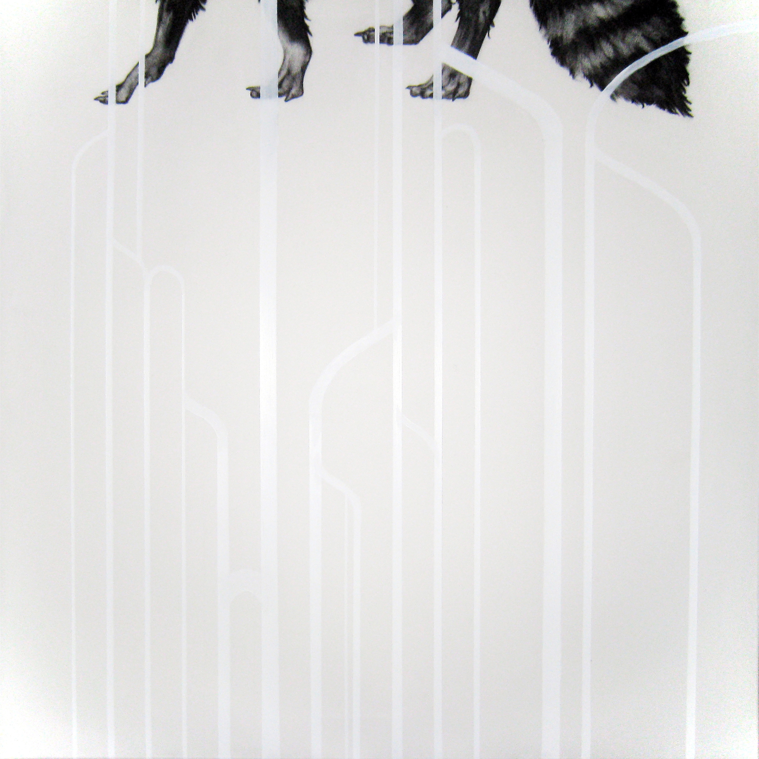 """Intracircuit (Raccoon), 2013  Charcoal and Acrylic on stretched paper  24x24"""""""