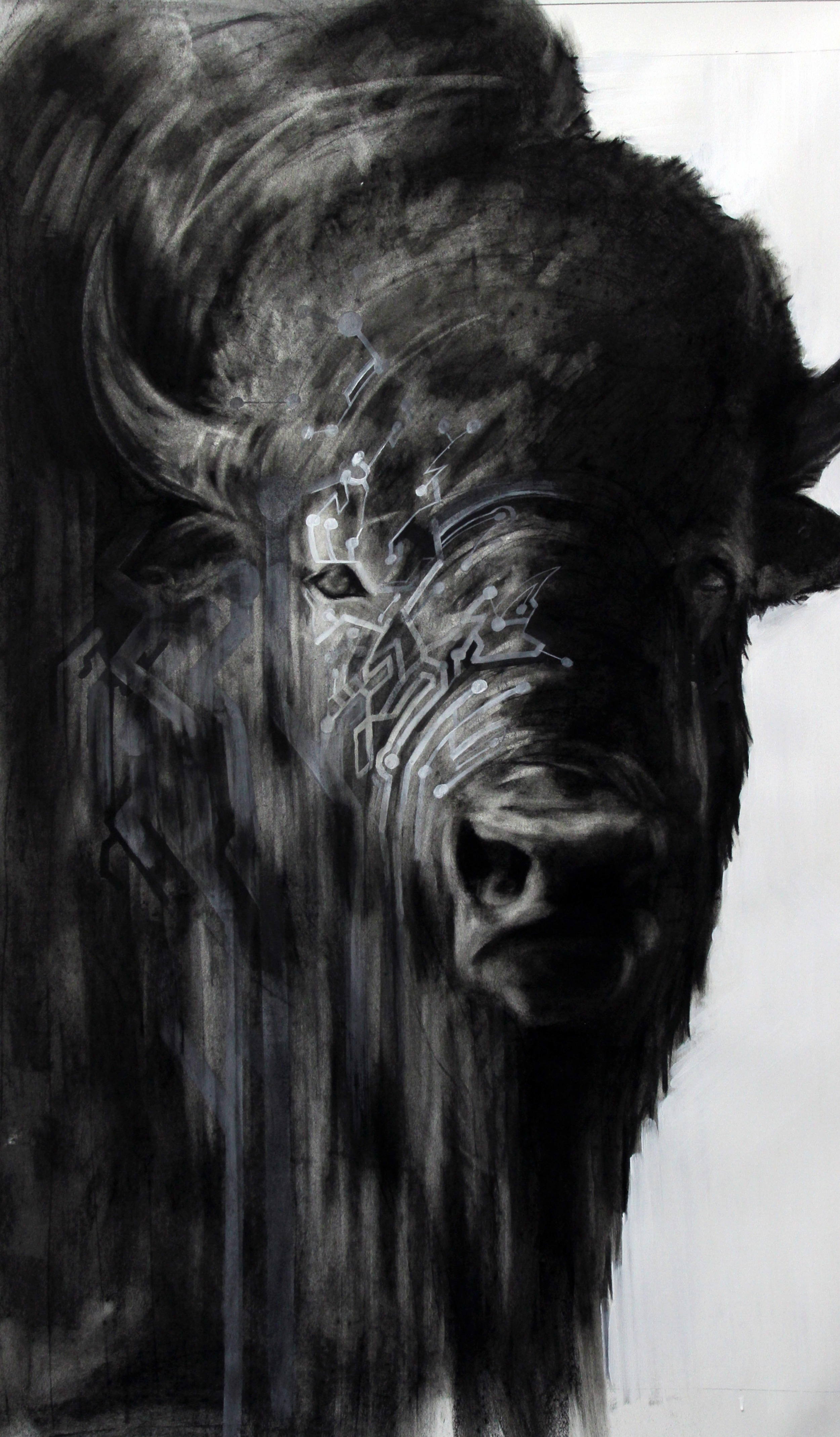 """Circuit Bison, 2012  Charcoal and Acrylic on stretched paper  28x48"""""""