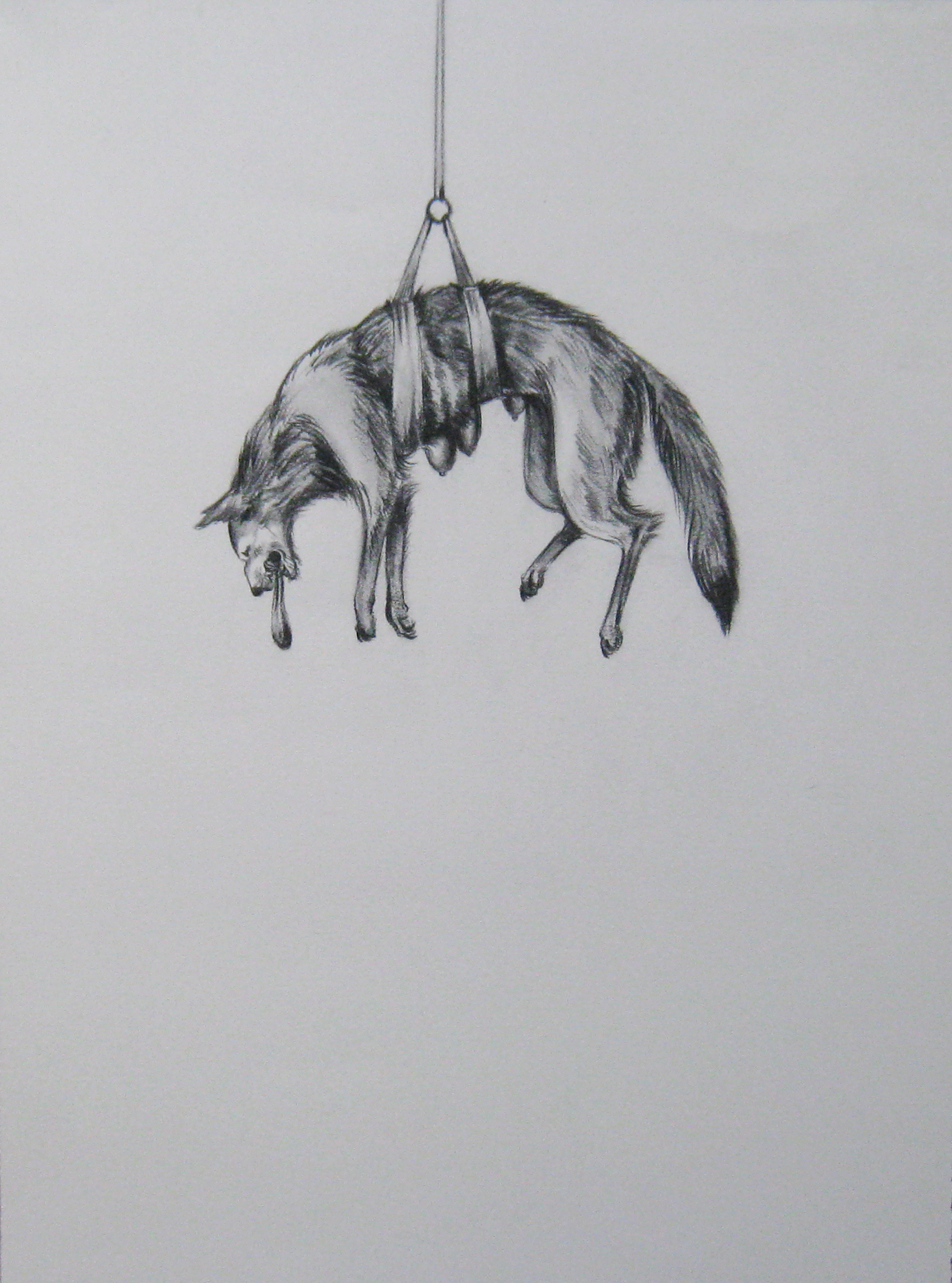 """Wolf on a Pulley, 2004  Charcoal on paper  10x14"""""""