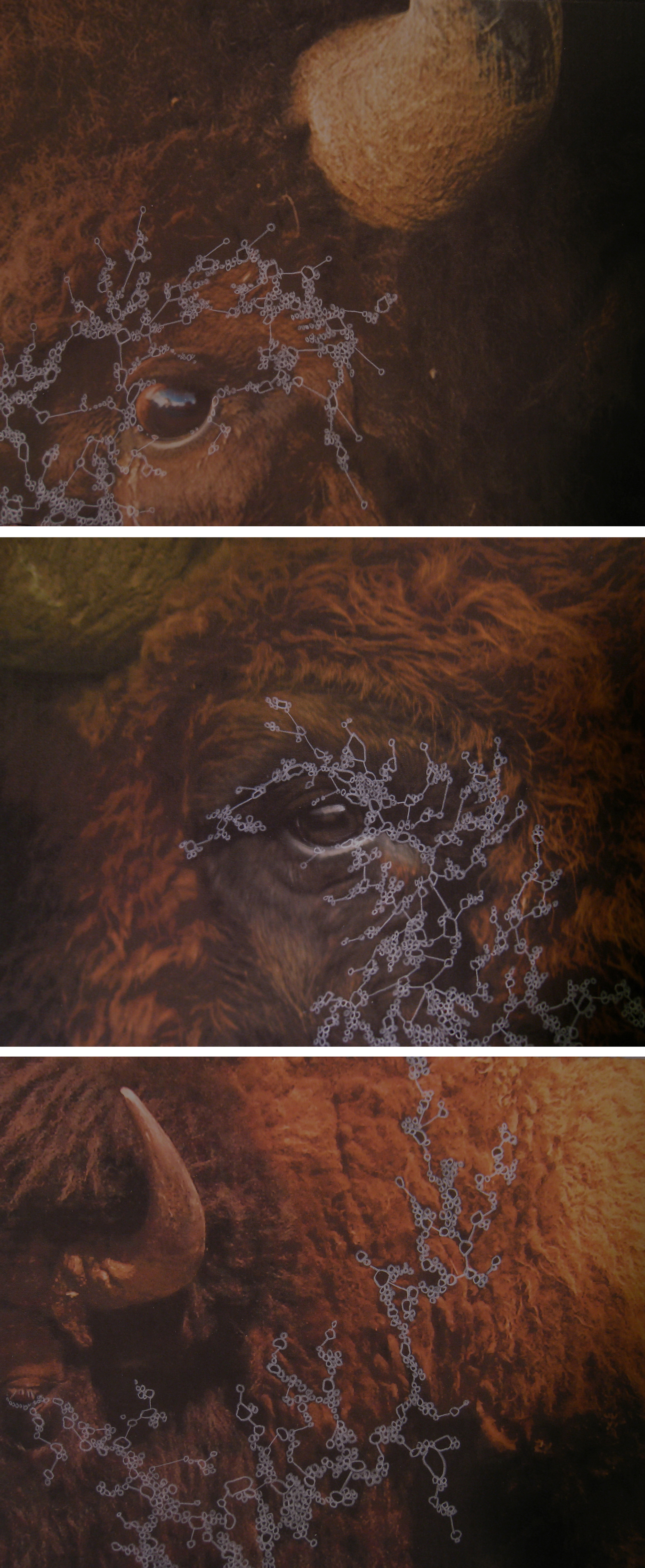 Iterations (BIson) Triptych , 2013  Inkjet Print and Drawing  24x10""