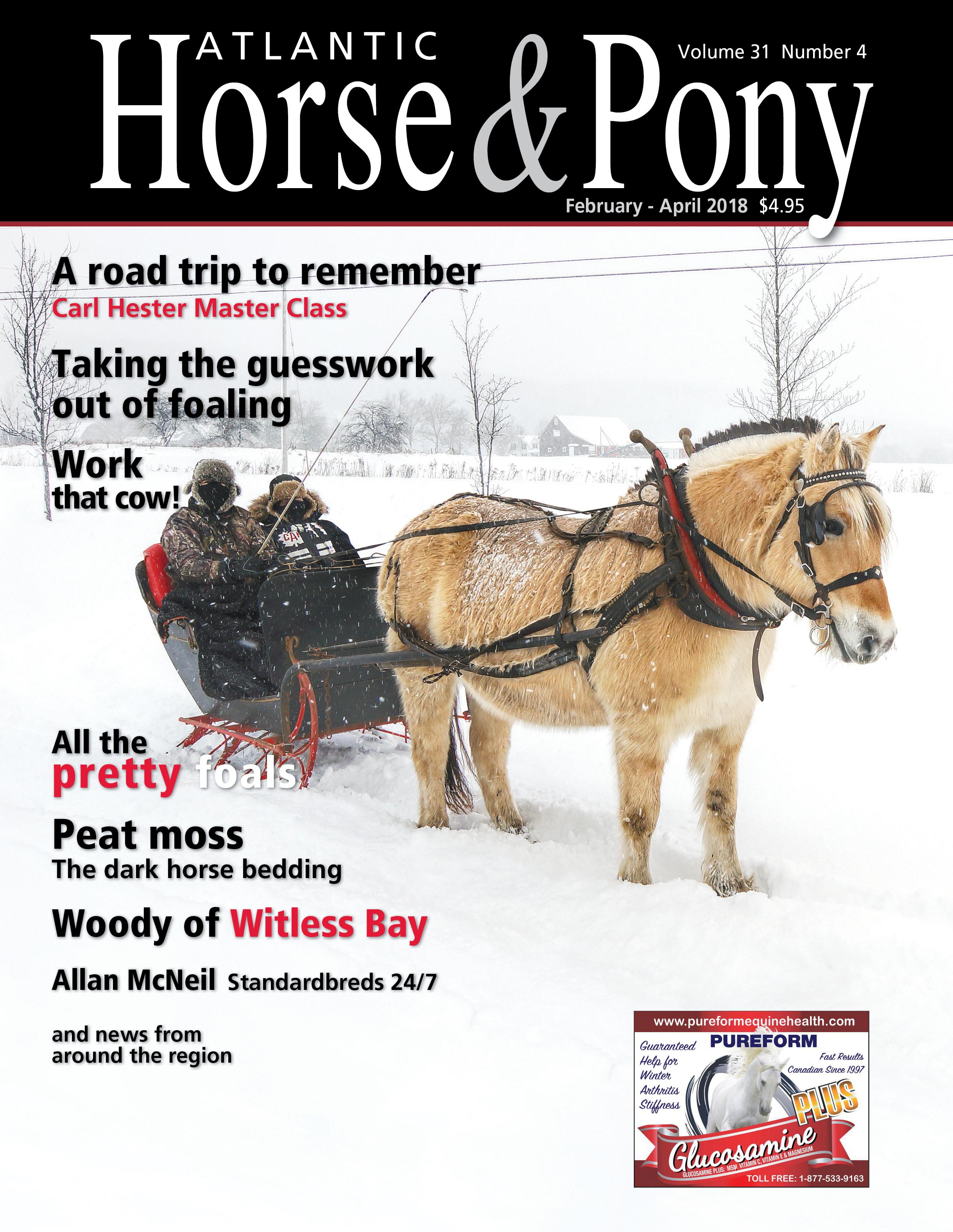HorsePonyfeb2018.jpg
