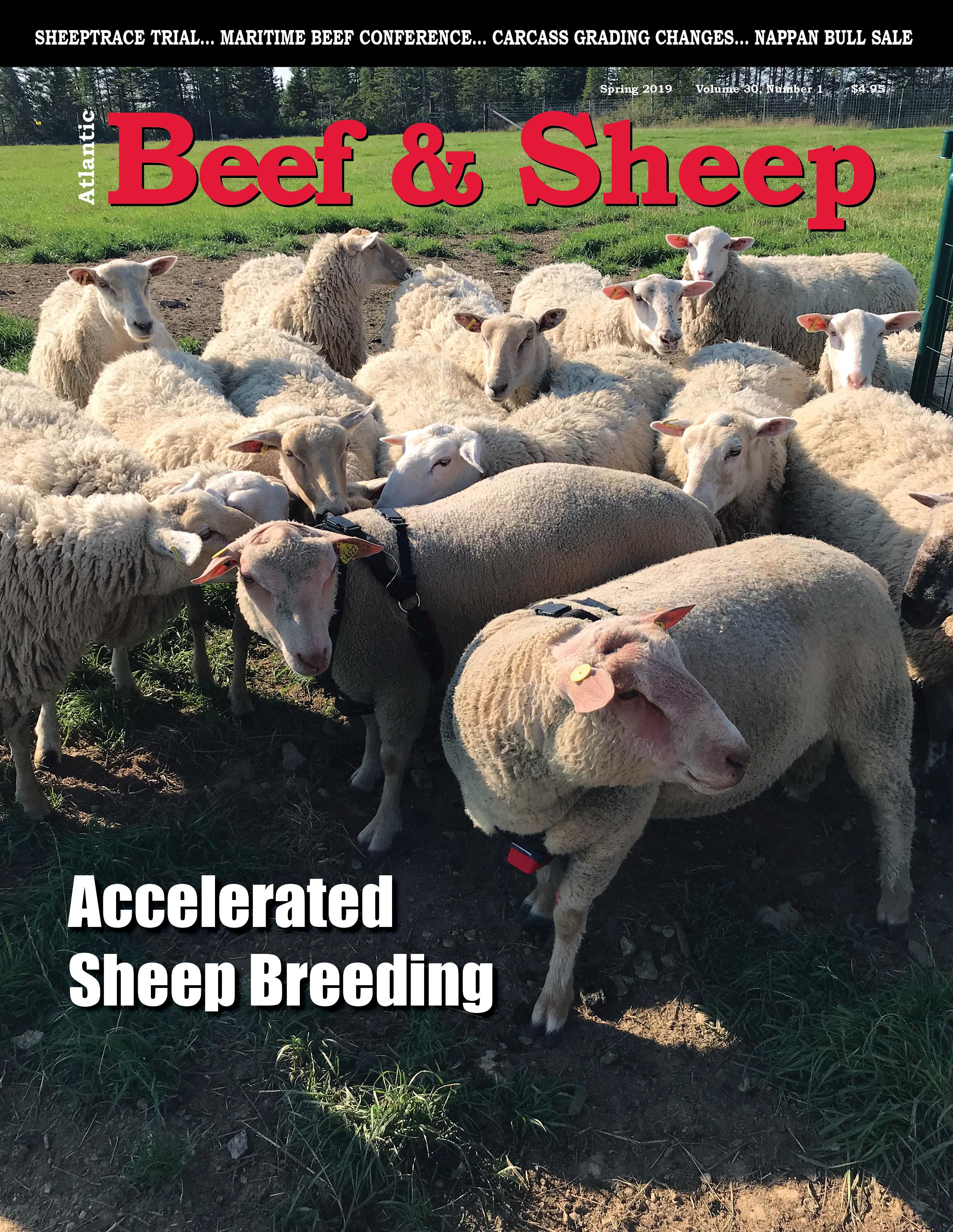 Atlantic Beef&Sheep Spring 2019.jpg