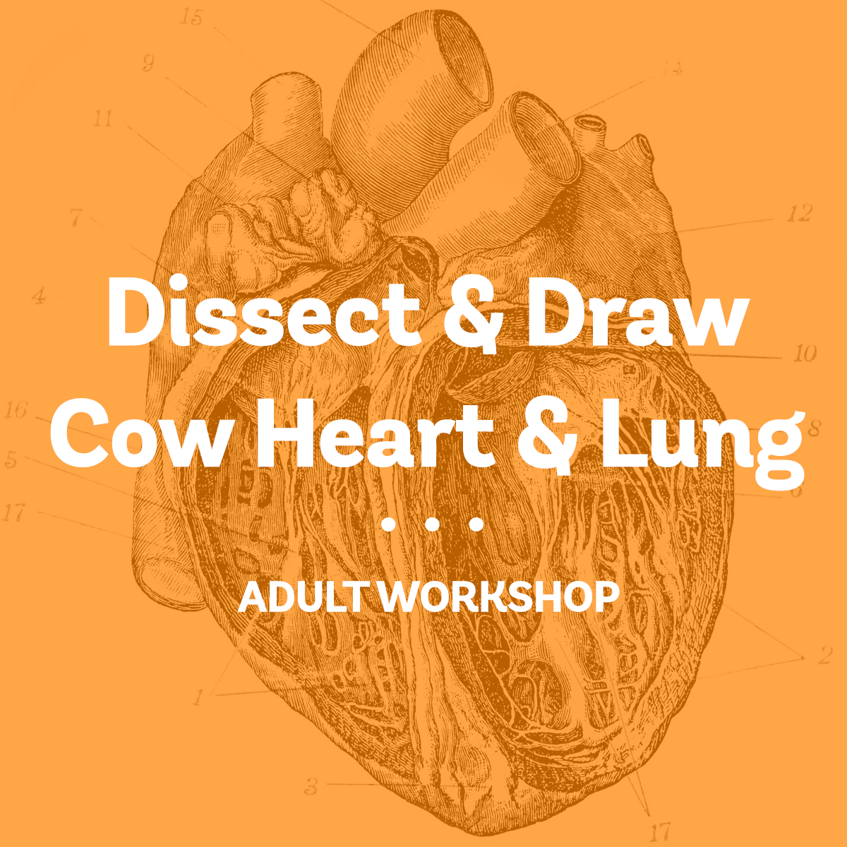 Dissect and Draw_2018.png