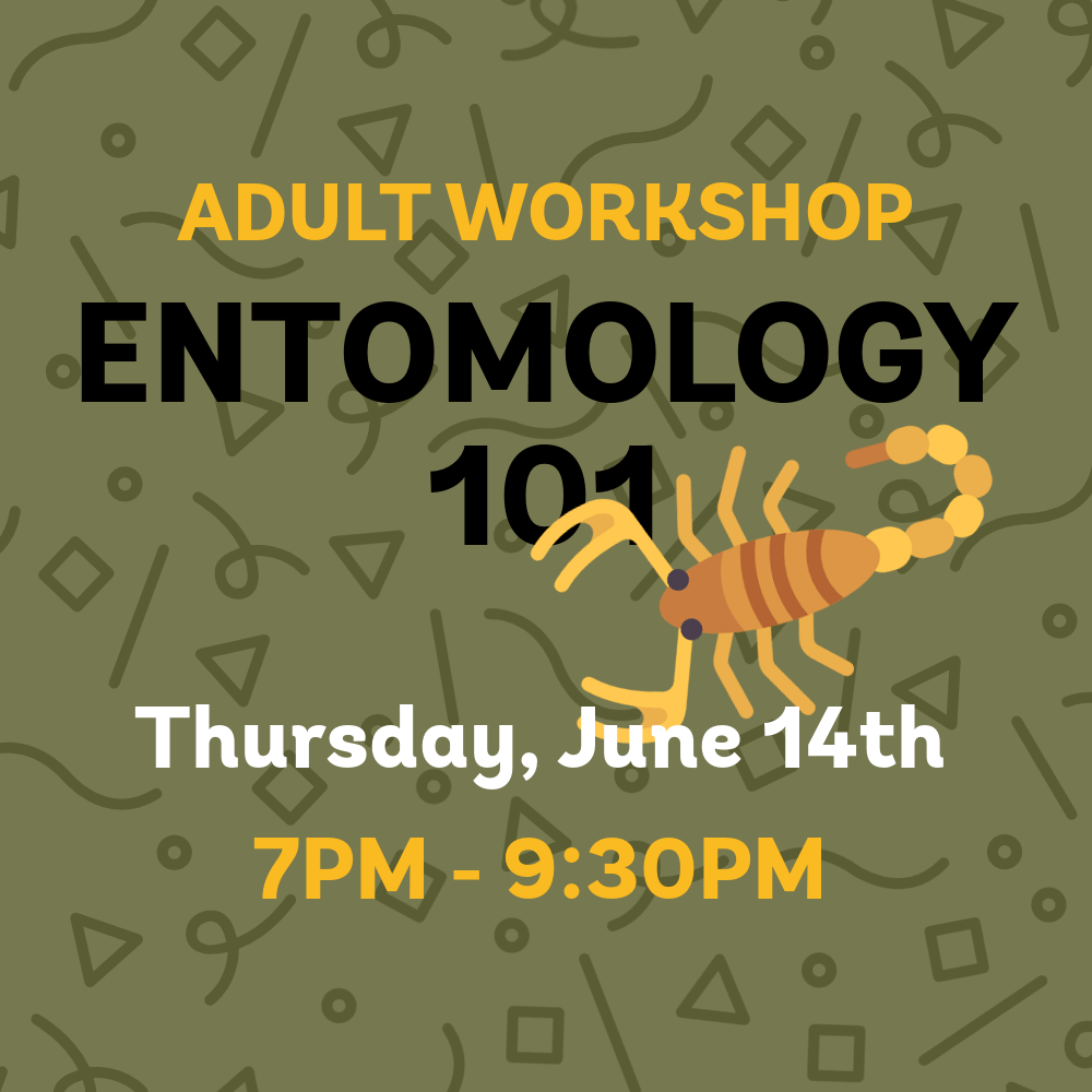 entomology101 _adultworkshop_square.png