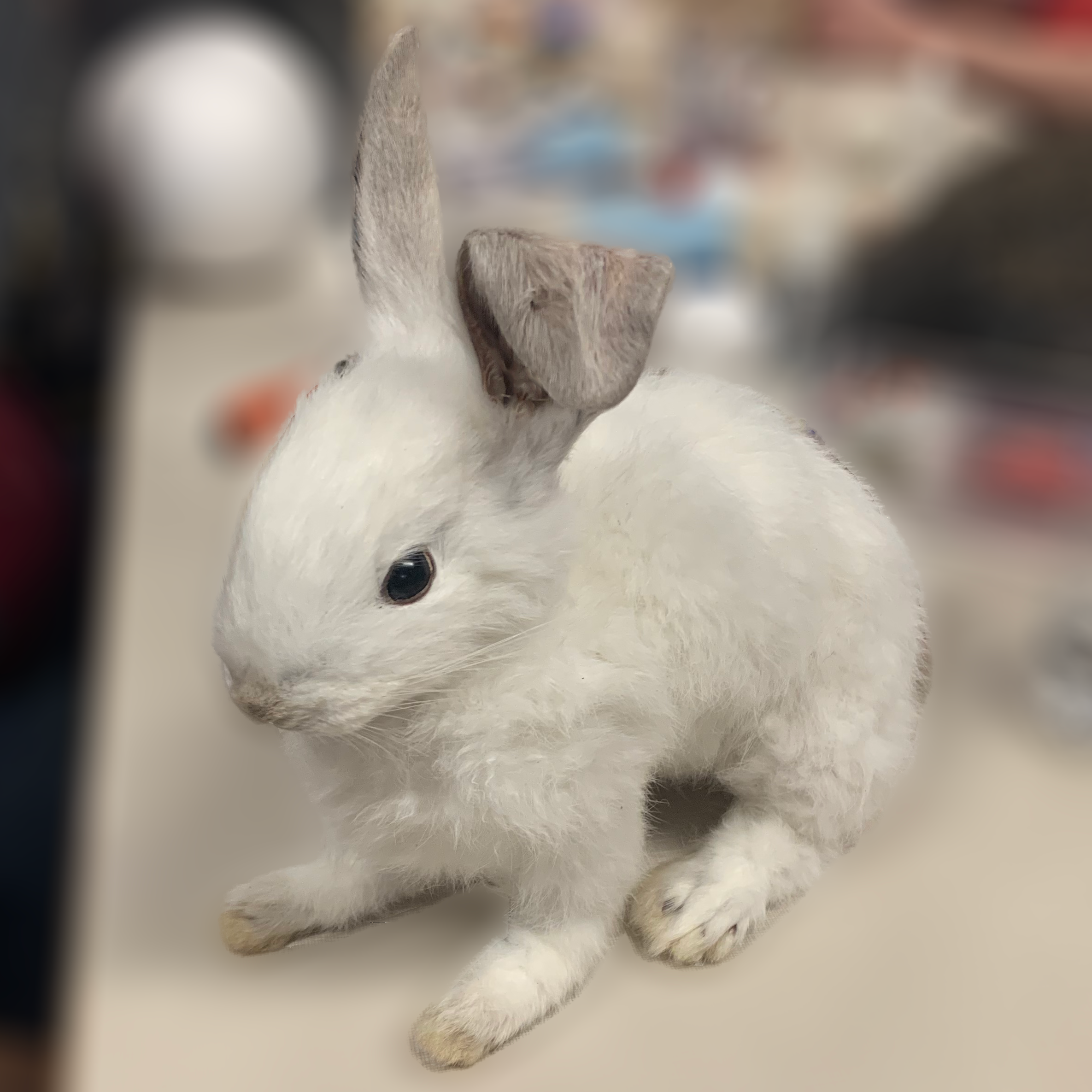 taxidermy_rabbit.png
