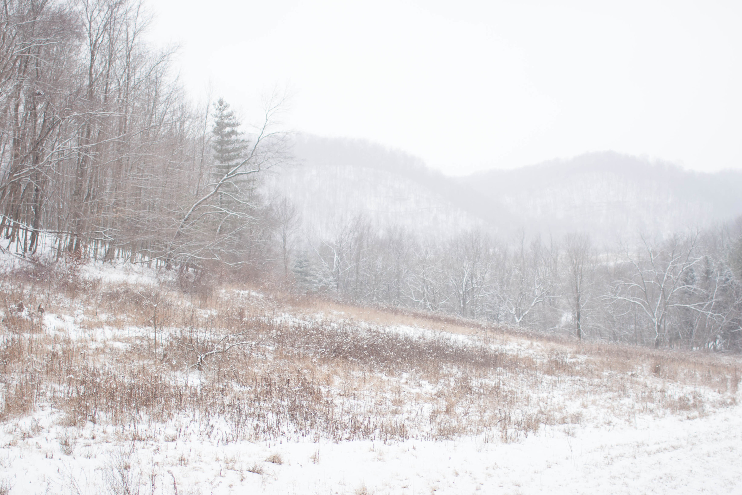 The Meadow House Jan. 2015-22.jpg