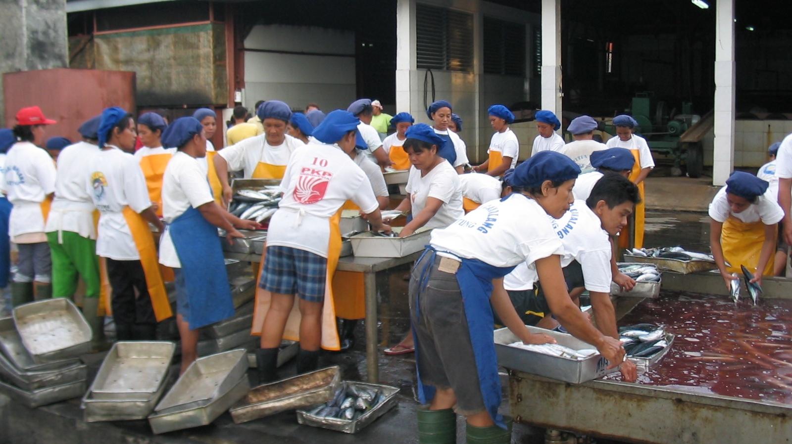 Sorting newly caught fish