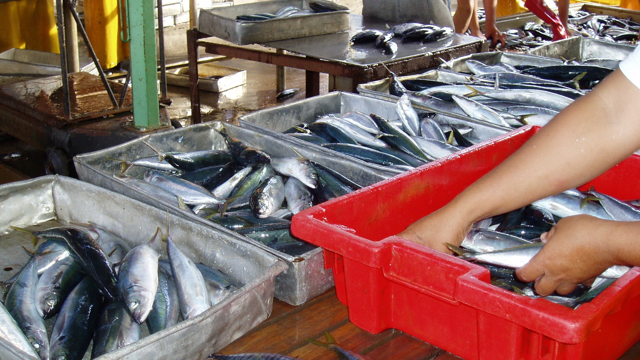 Sorting fish