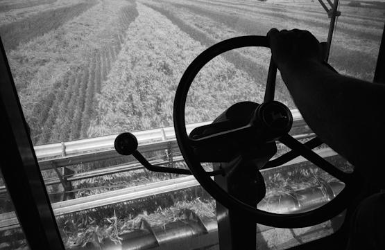27_Maio_Cutting_Wheat_Marquette_KS.jpg