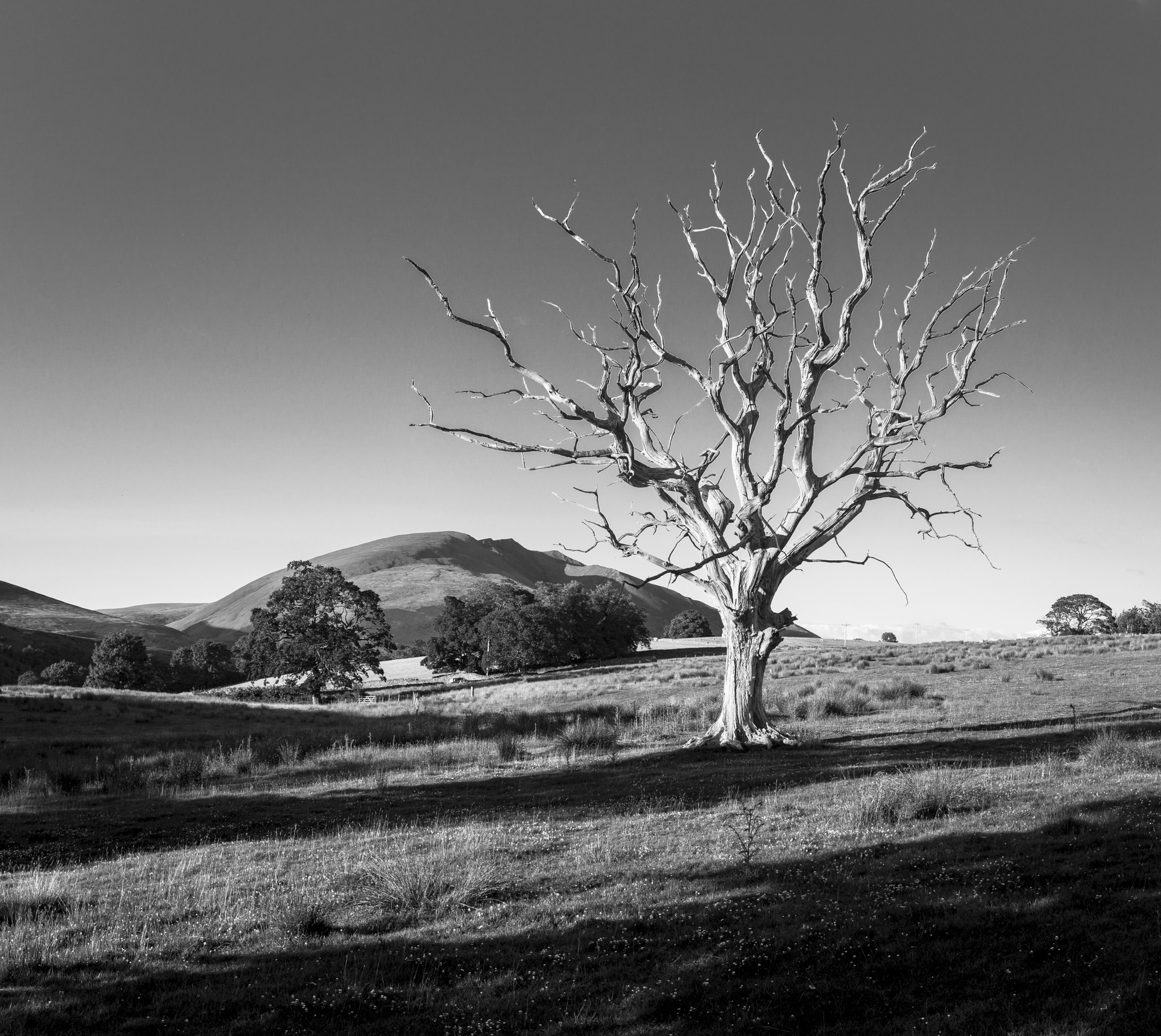 ©_Mark_Maio_2015_Lone _Tree.jpg
