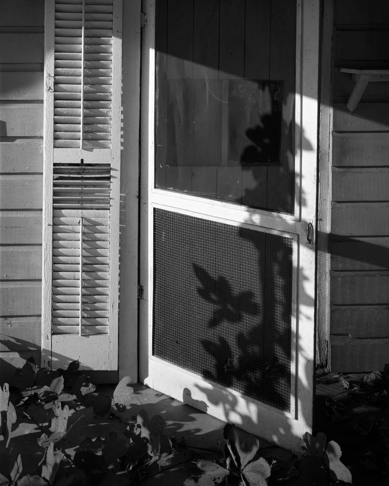 """Screen Door with Kudzu"" © Mark Maio"