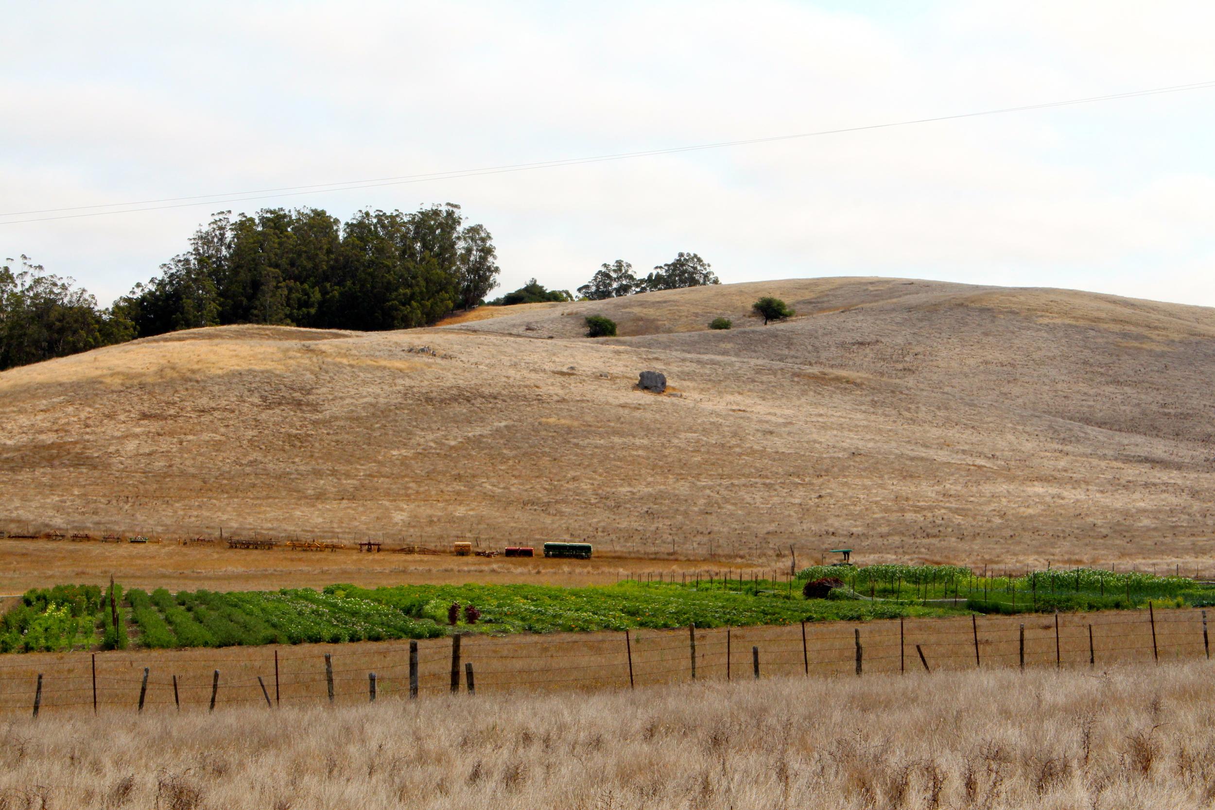 vegetablefields.jpg