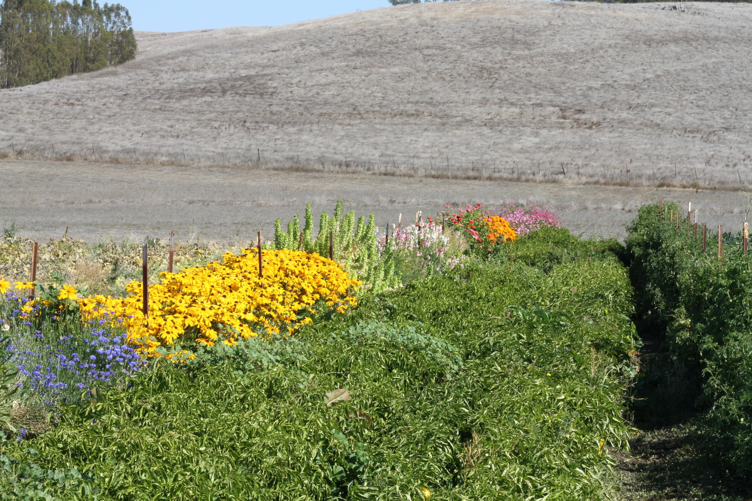 flowersandvegetables.jpg