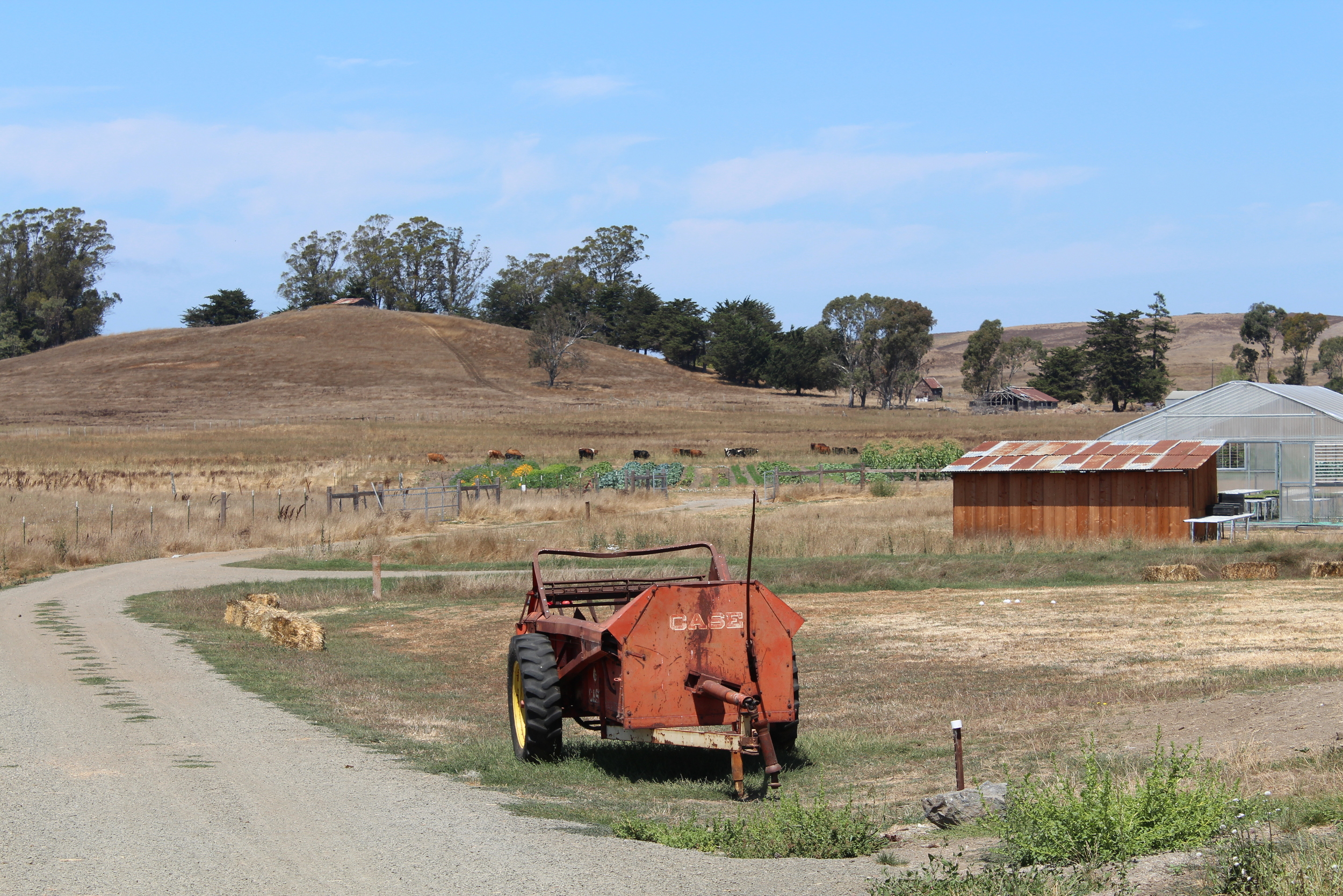 Manure spreader, greenhouse, vegetable fields, and cows.