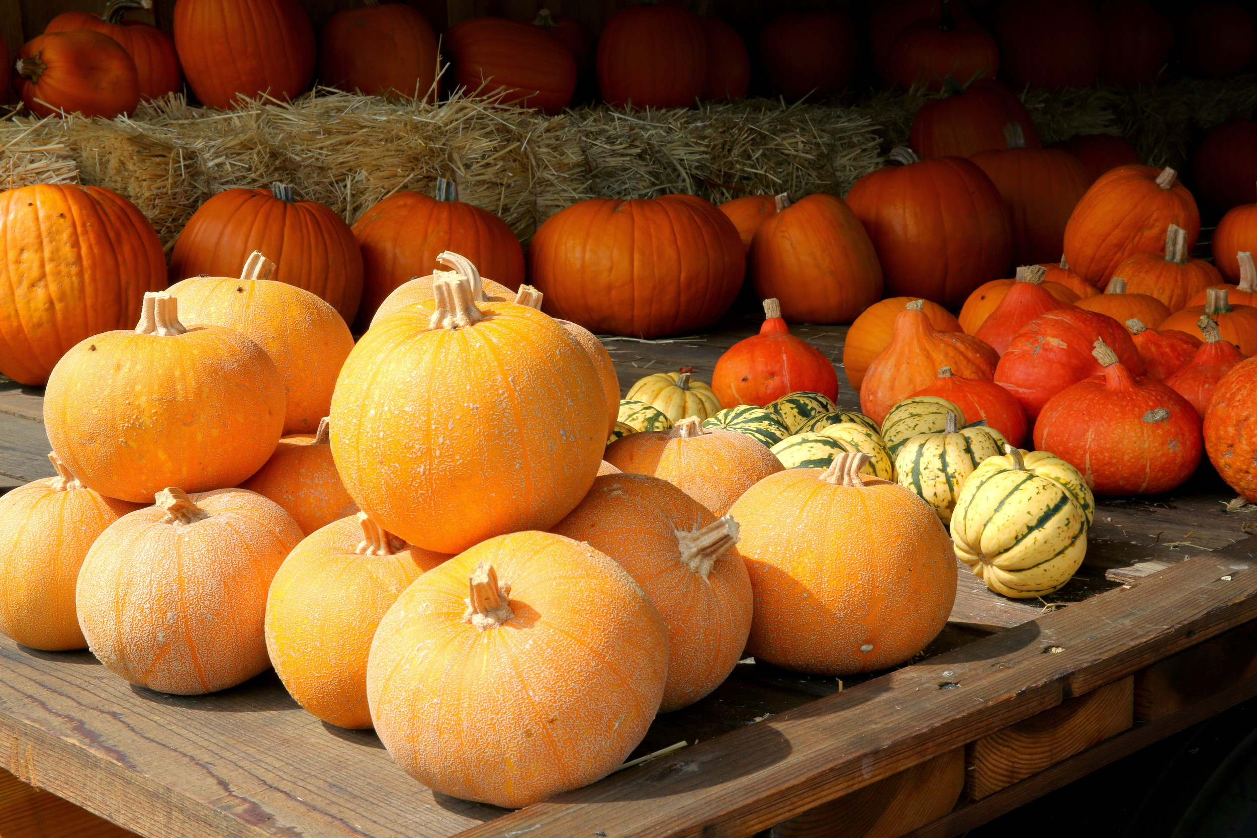 Pumpkins and Winter Squash