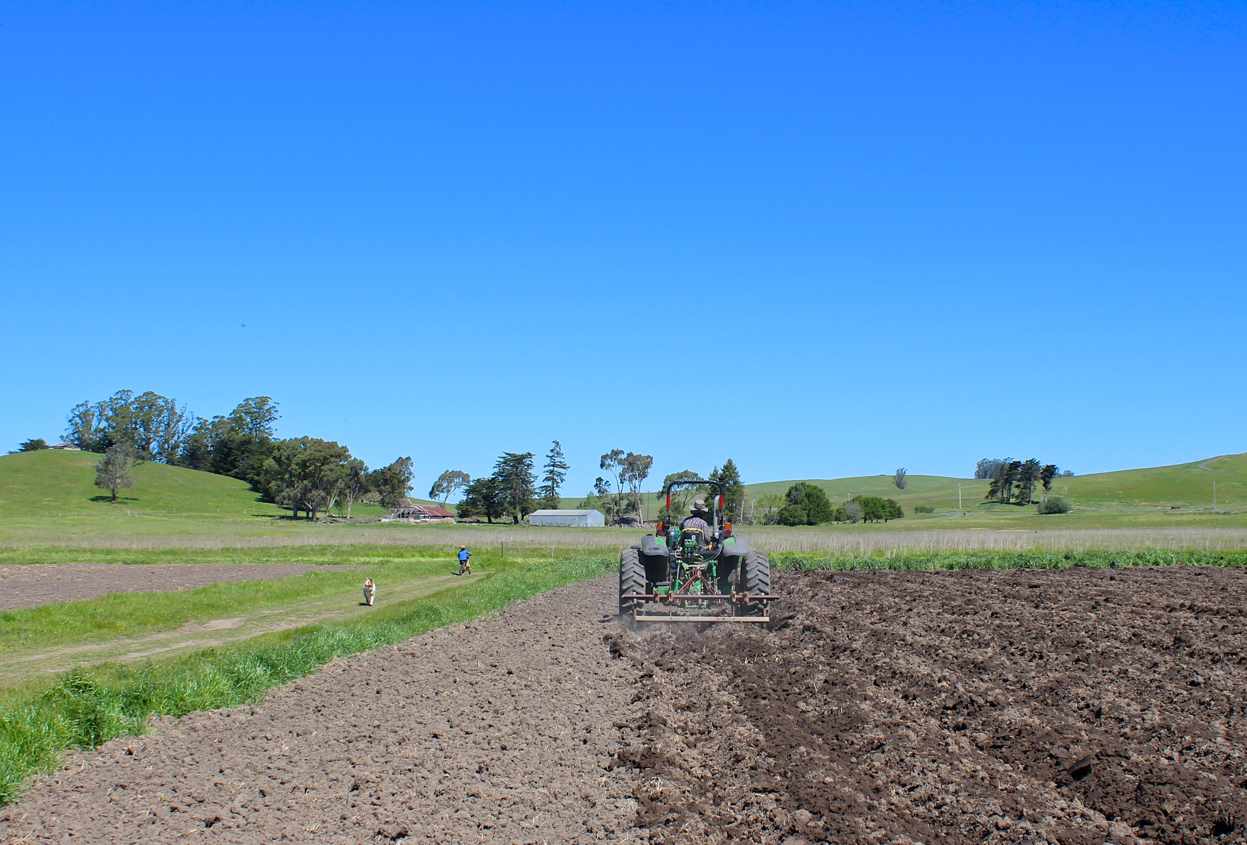 Jay shaping beds for potatoes as Oliver and Rosie pass by.
