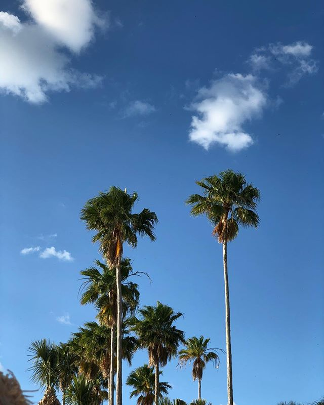 Tropics #palmtrees #florida #dunedinflorida #vacation