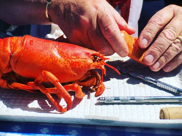Lunchtime #lobster #lunchtime #maine #kitterypoint