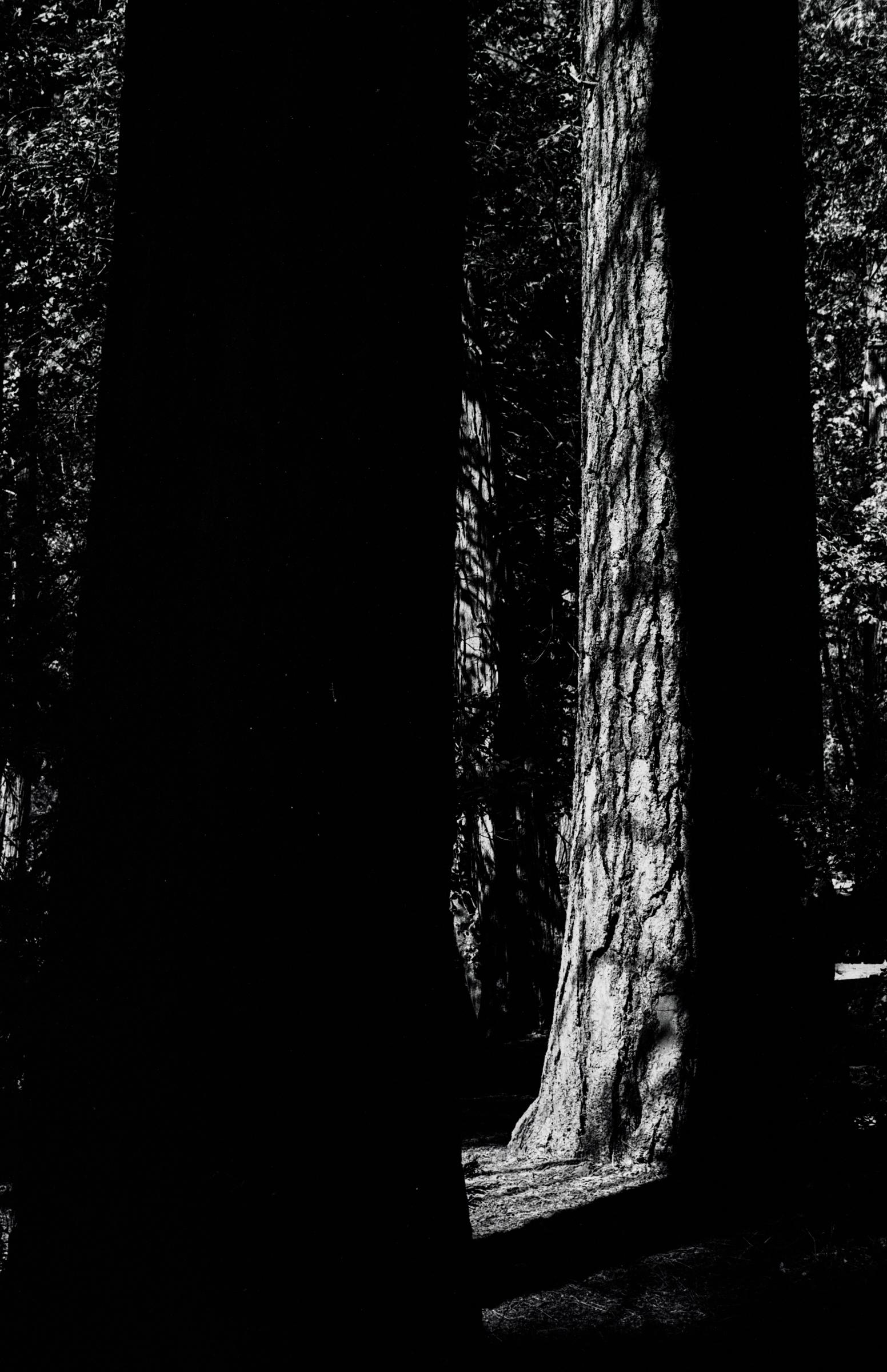 TreeInShadows1.jpg