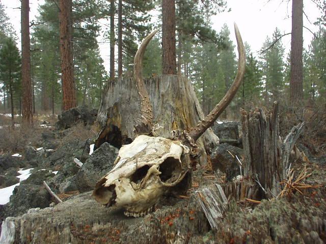 skulll 004.JPG