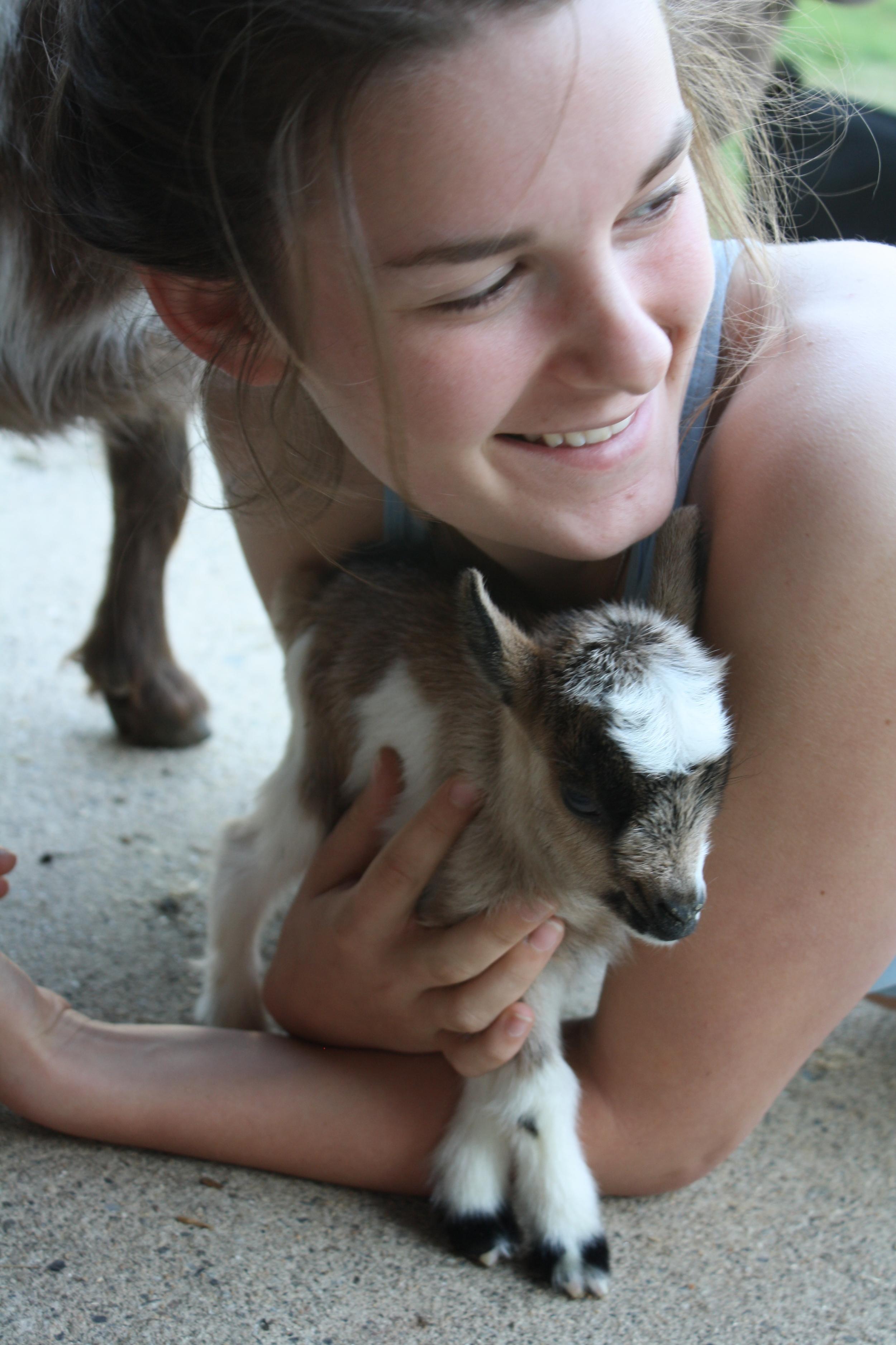 Goats For Sale Sunflower Farm Creamery
