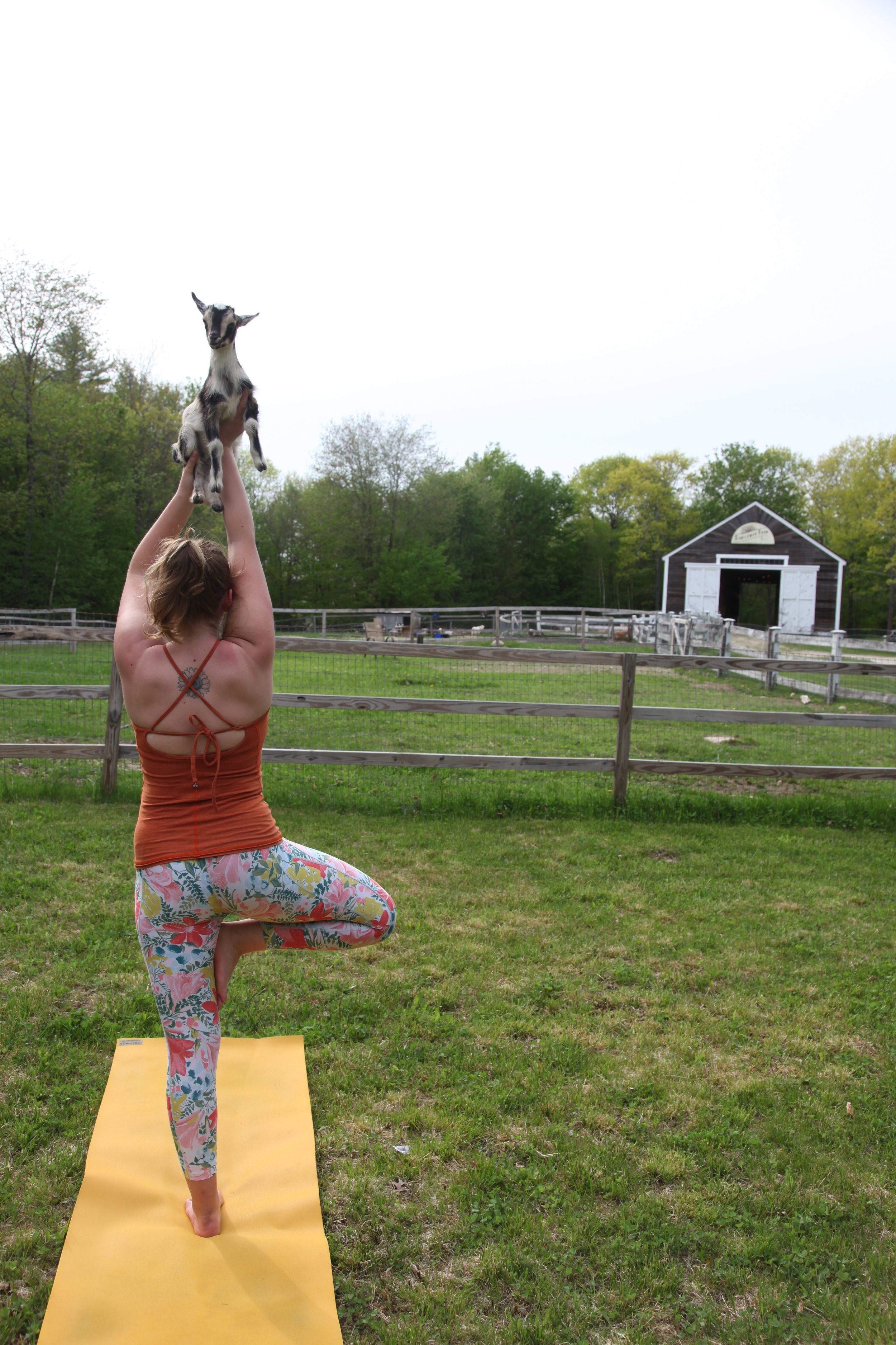 Tess and Martha the goat are excited for farm yoga!