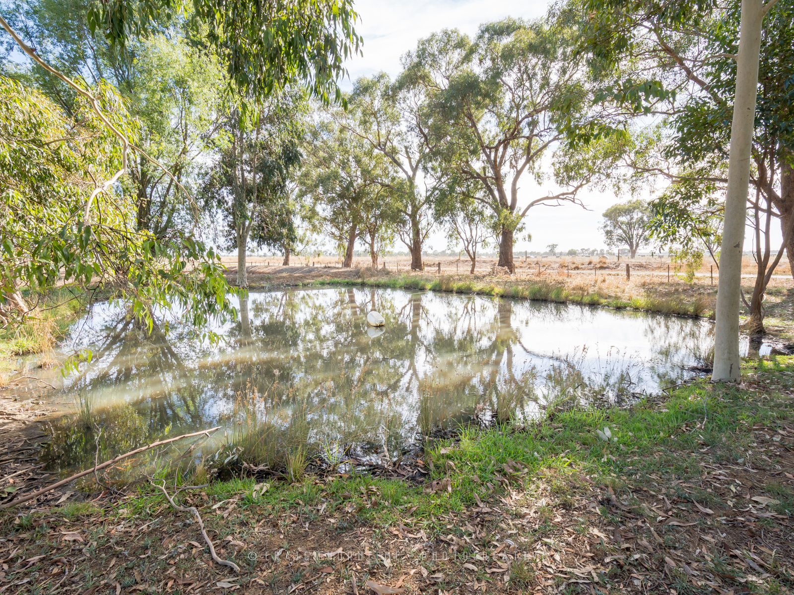 180215-21-CRE-185-Ross-Rd-Coomboona–©CT-THN_2174.jpg