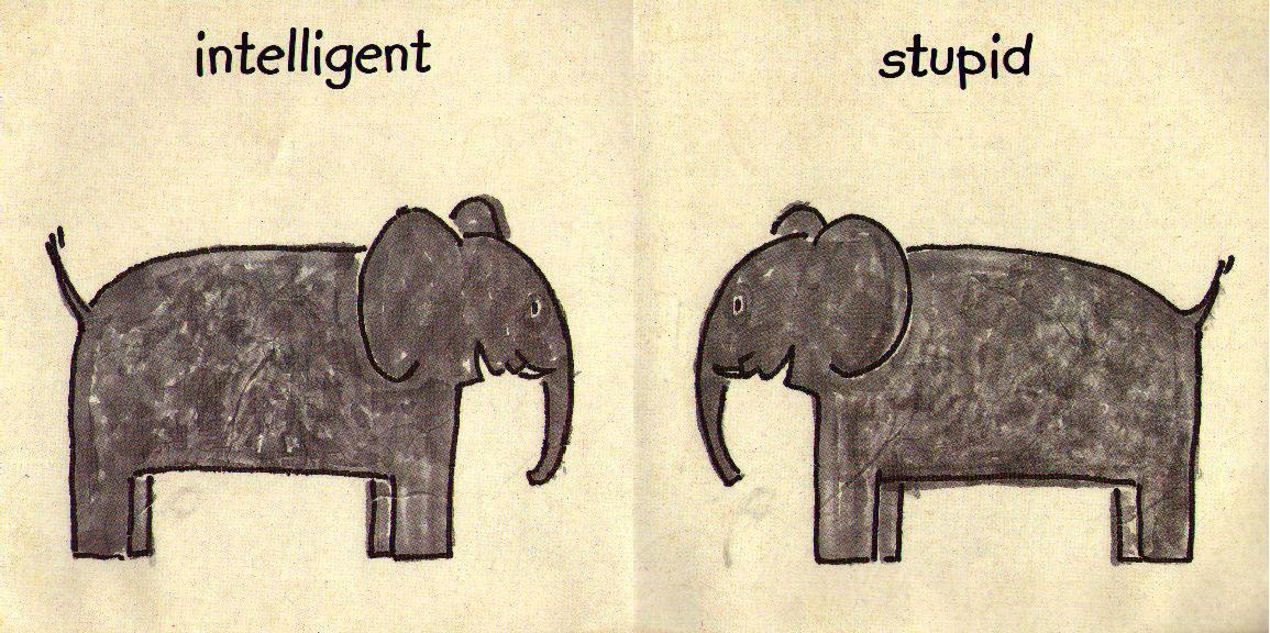 elephant elements 1155x576.jpg