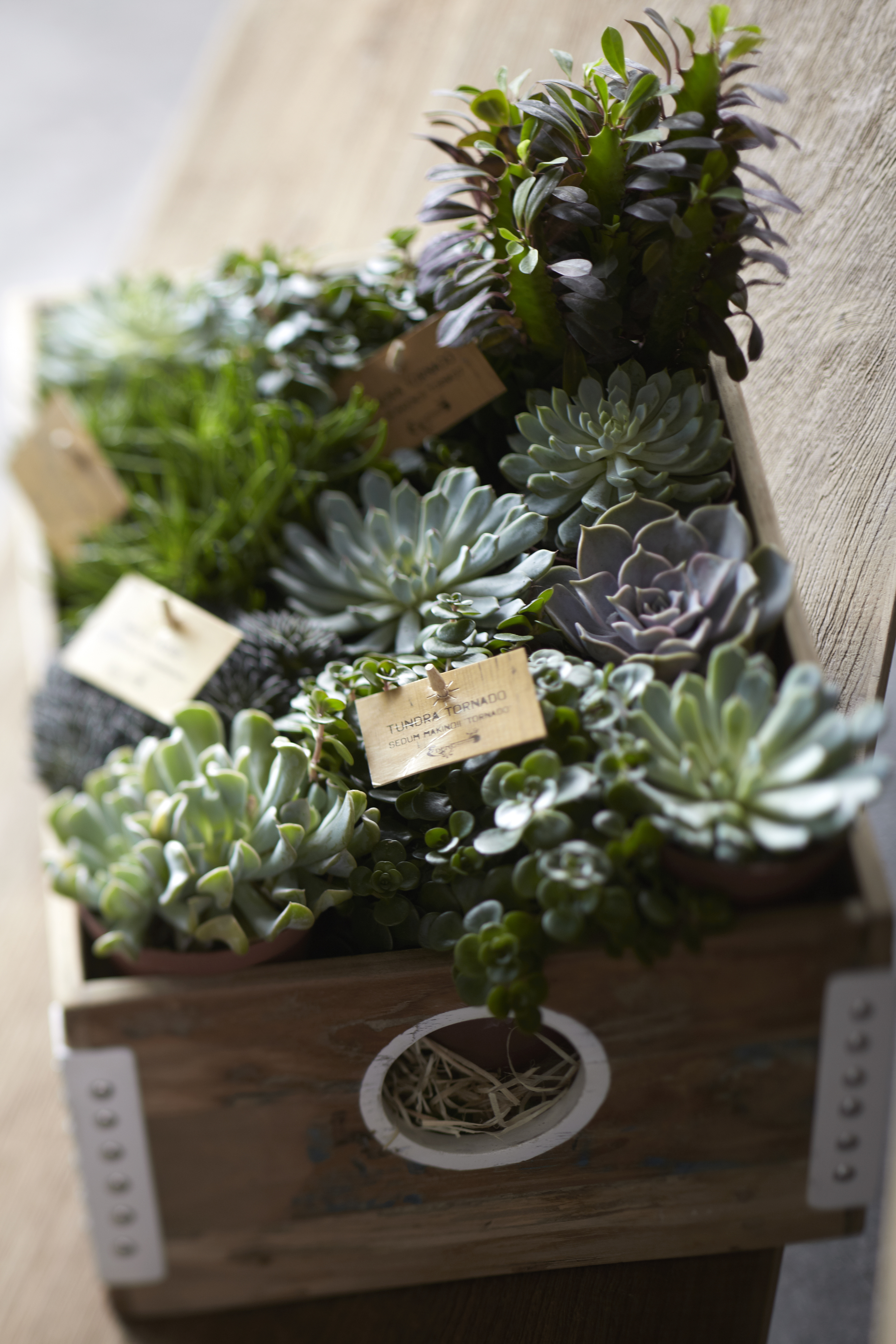 TREE flowers from the heart - potted plants planter box.jpg