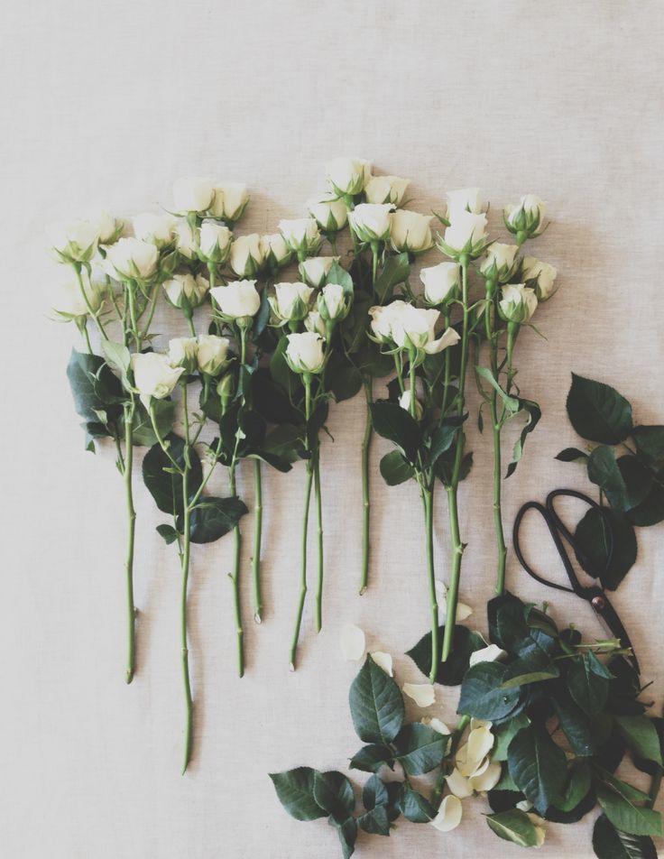http://www.pinterest.com/priscillajoy18/house-of-tulips/