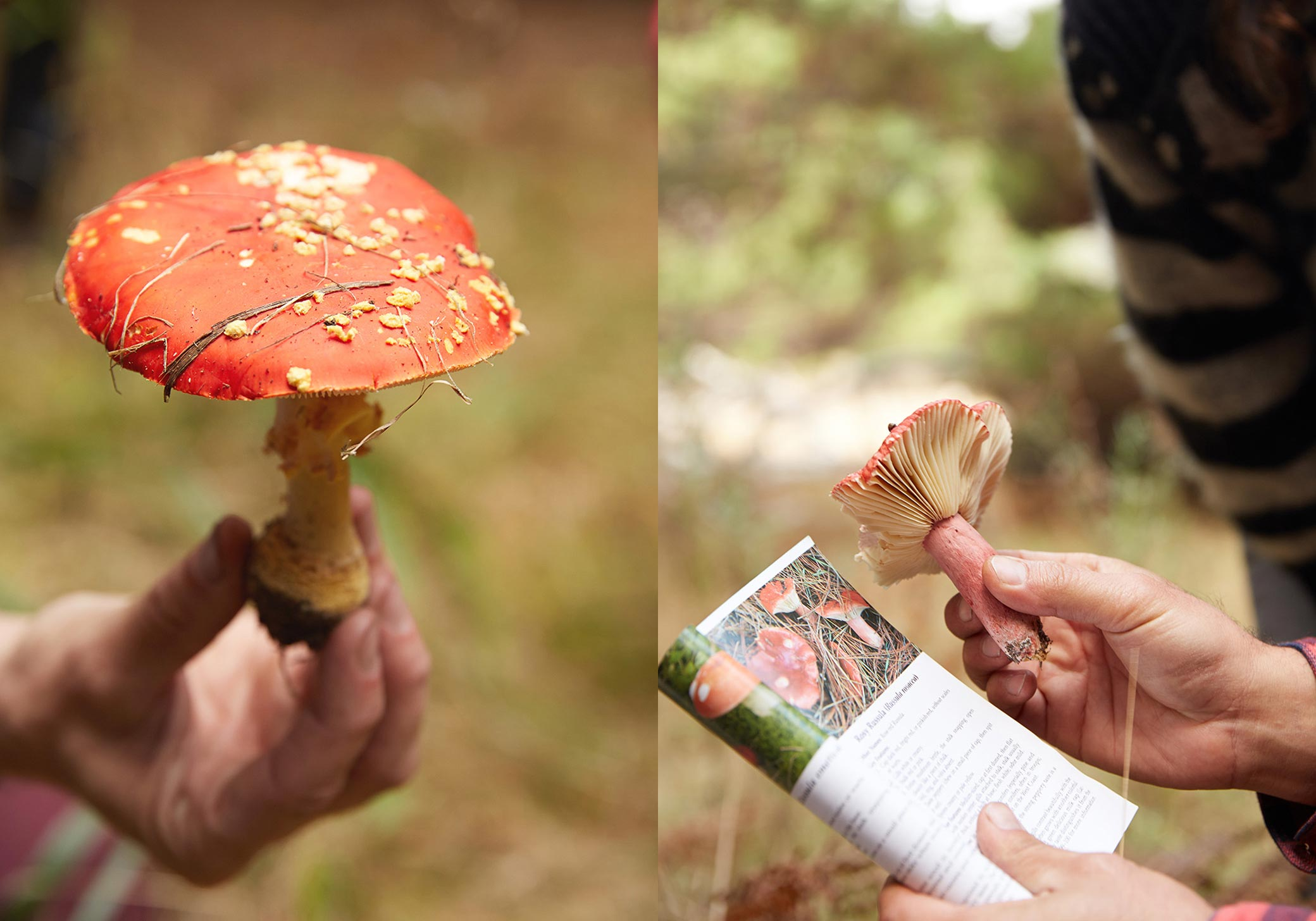 07_tiny-atlas-thayer-gowdy-mushroom-gathering-camping-guide-book_L.jpg