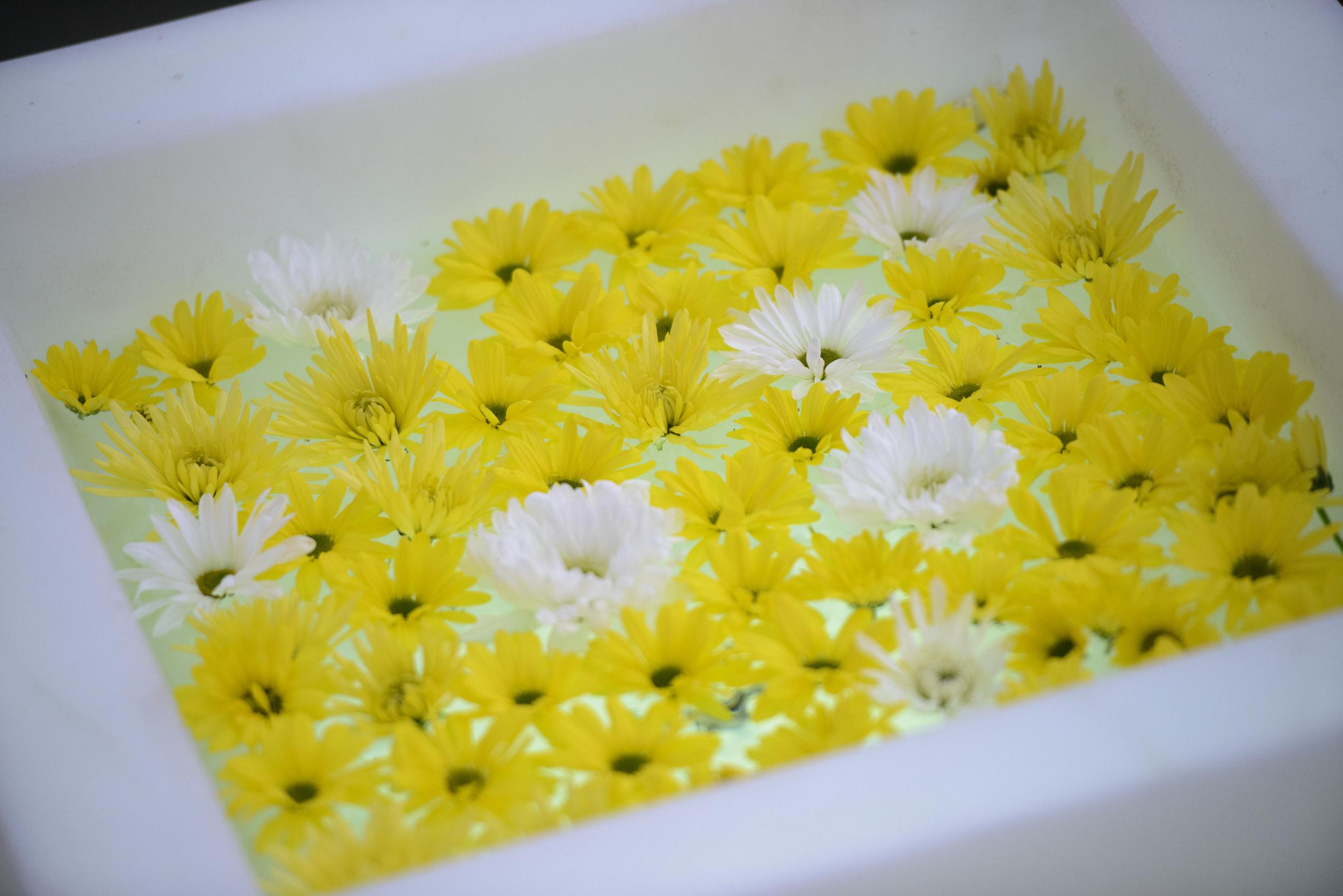 We had flowers. Isn't it lovely.