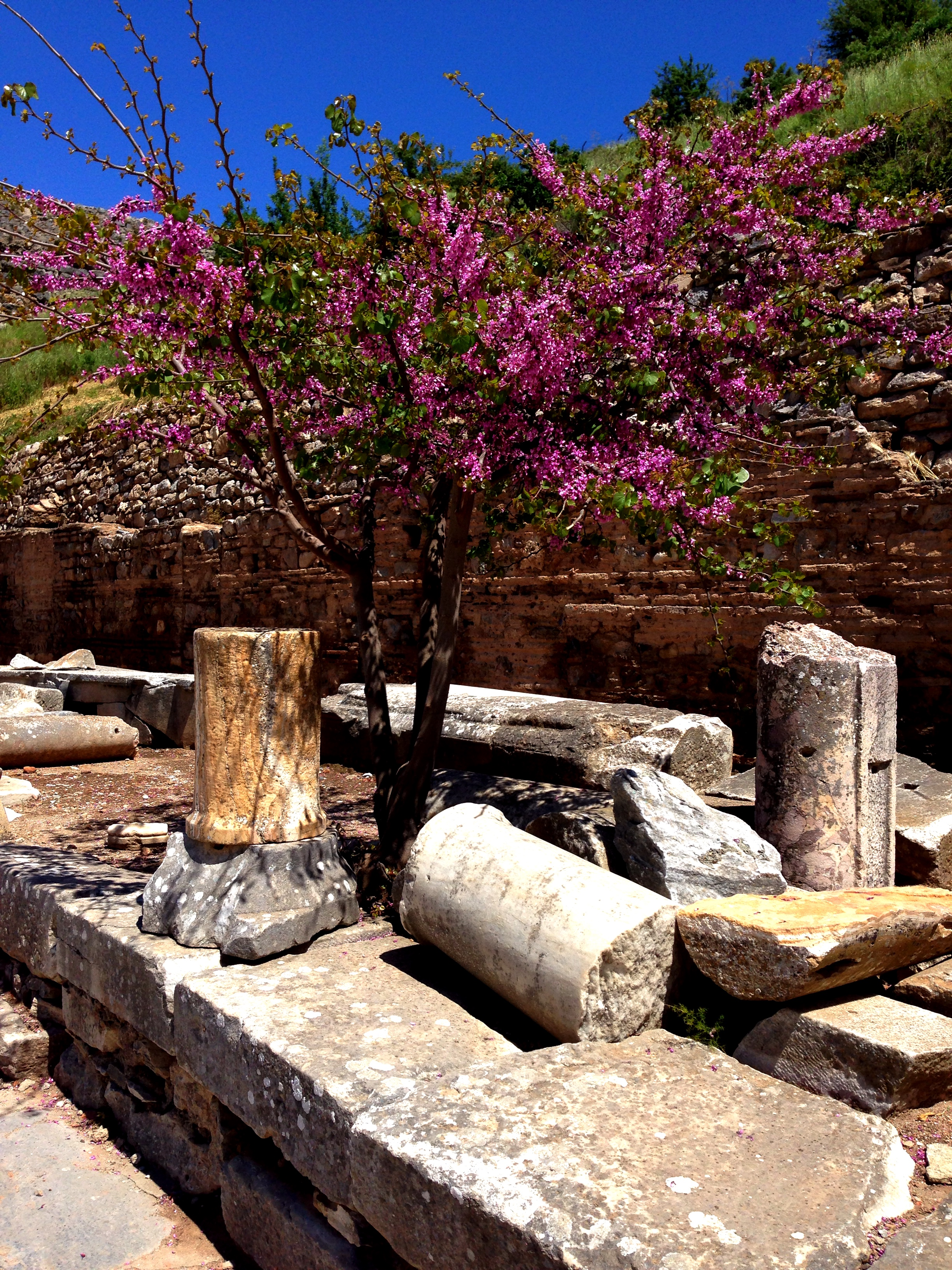 Flowers at Ephesus. (repost from  here ). Photo from my own collection.
