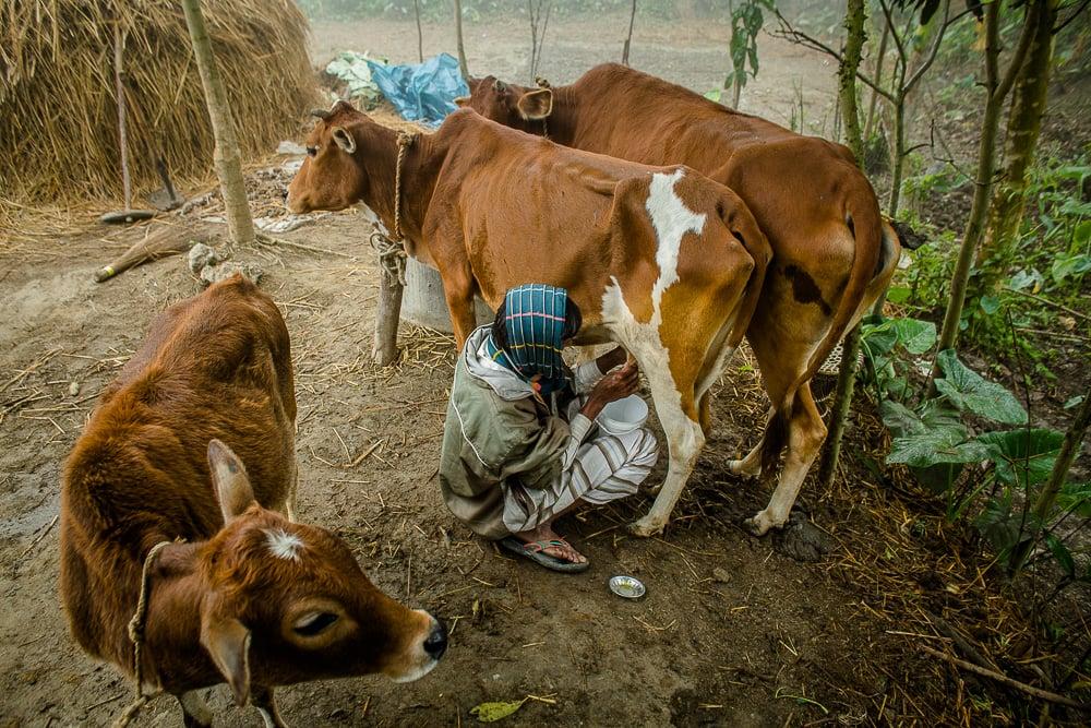 151213-bangladesh-estey-0109-web.jpg
