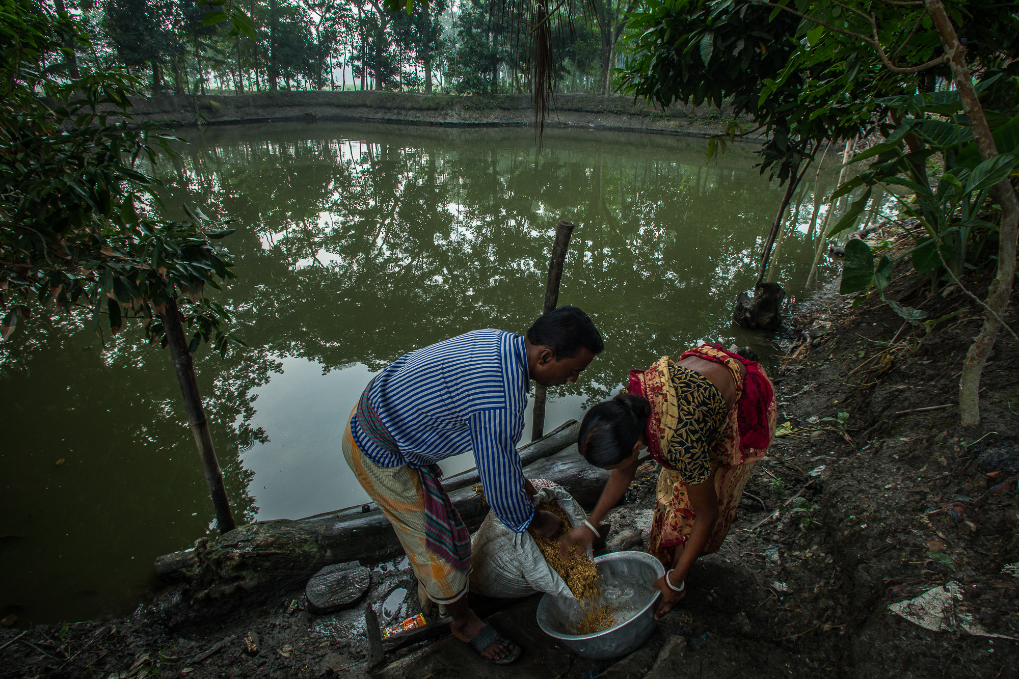 During harvest season, Taroni and his wife soak the rice they have harvested in the pond near their house. before boiling it and then laying it out to dry.