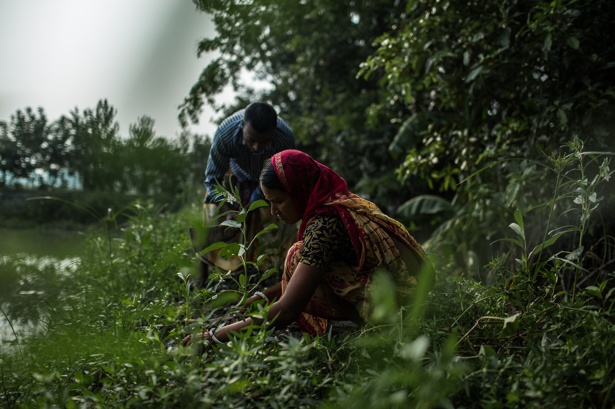 Through training funded by USAID, Taroni and his wife learned how to plant seedlings in a row.