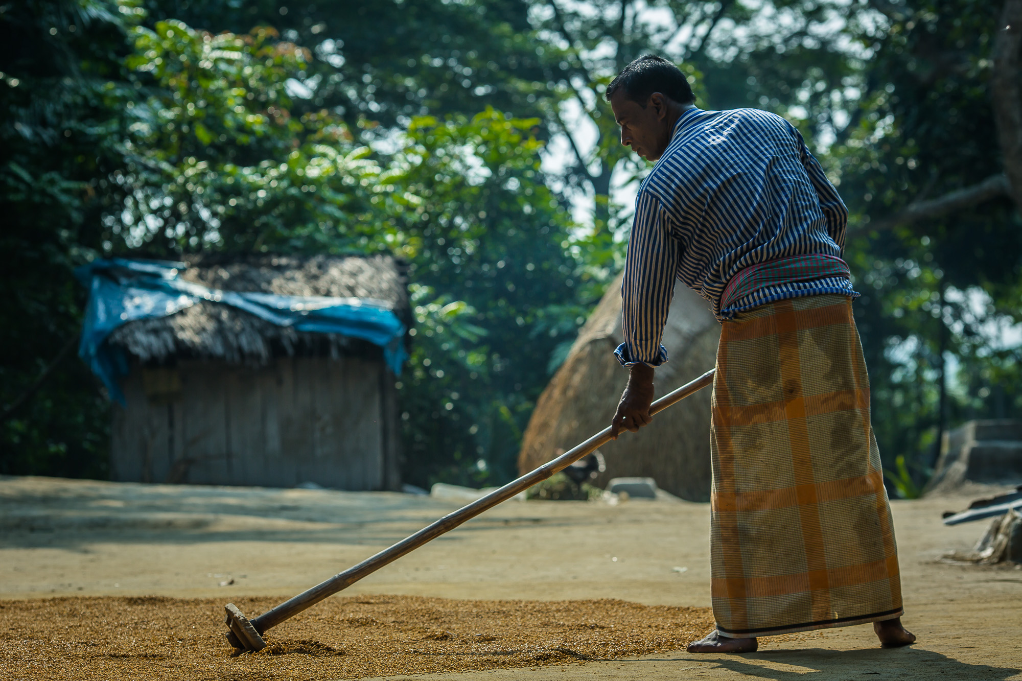 Taroni spreads his rice harvest out on the ground to dry after soaking it in a pond and boiling it.