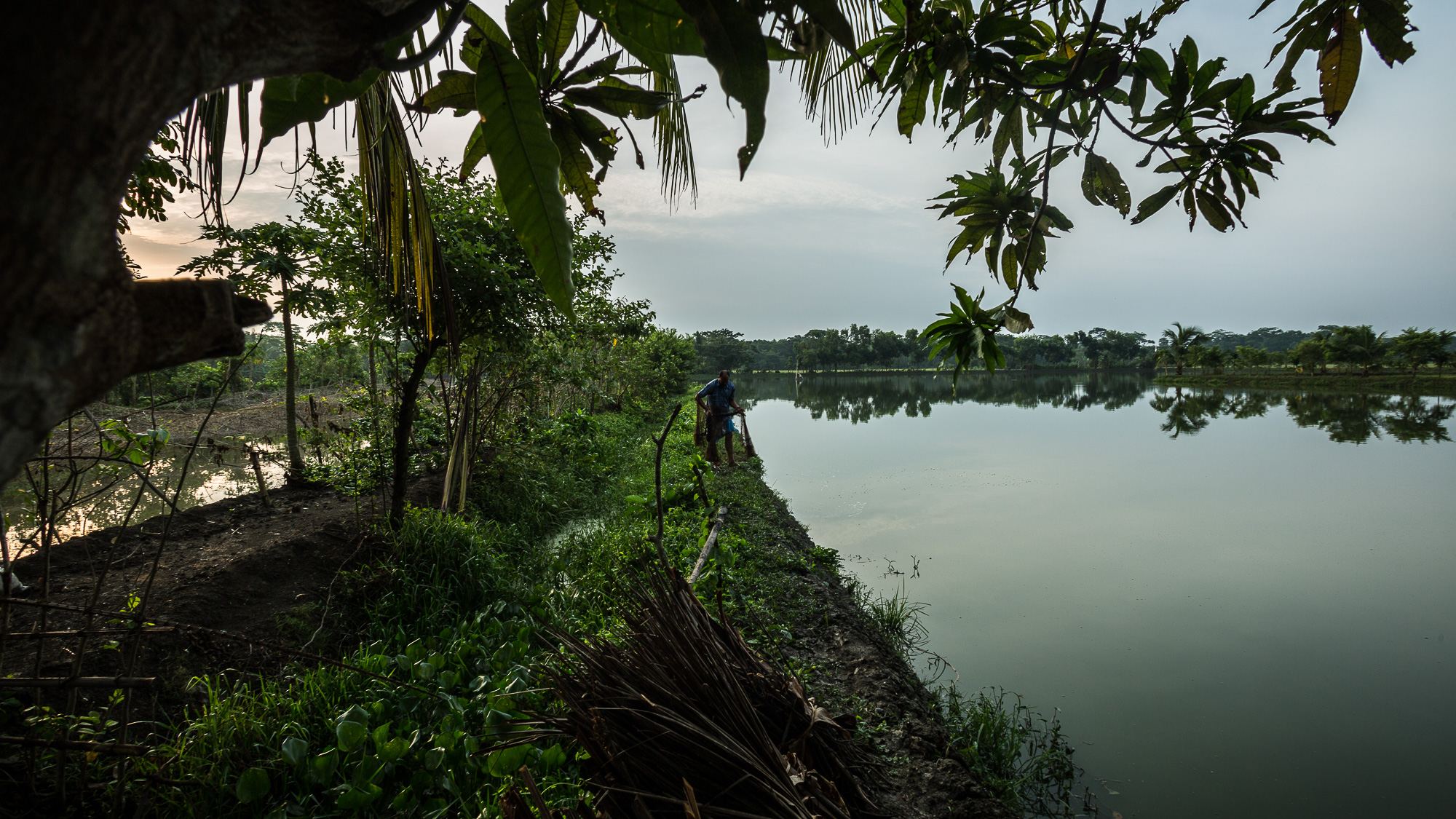 Mambubur Rahman (Babul), 36, casts his net into a nearby fish pond.