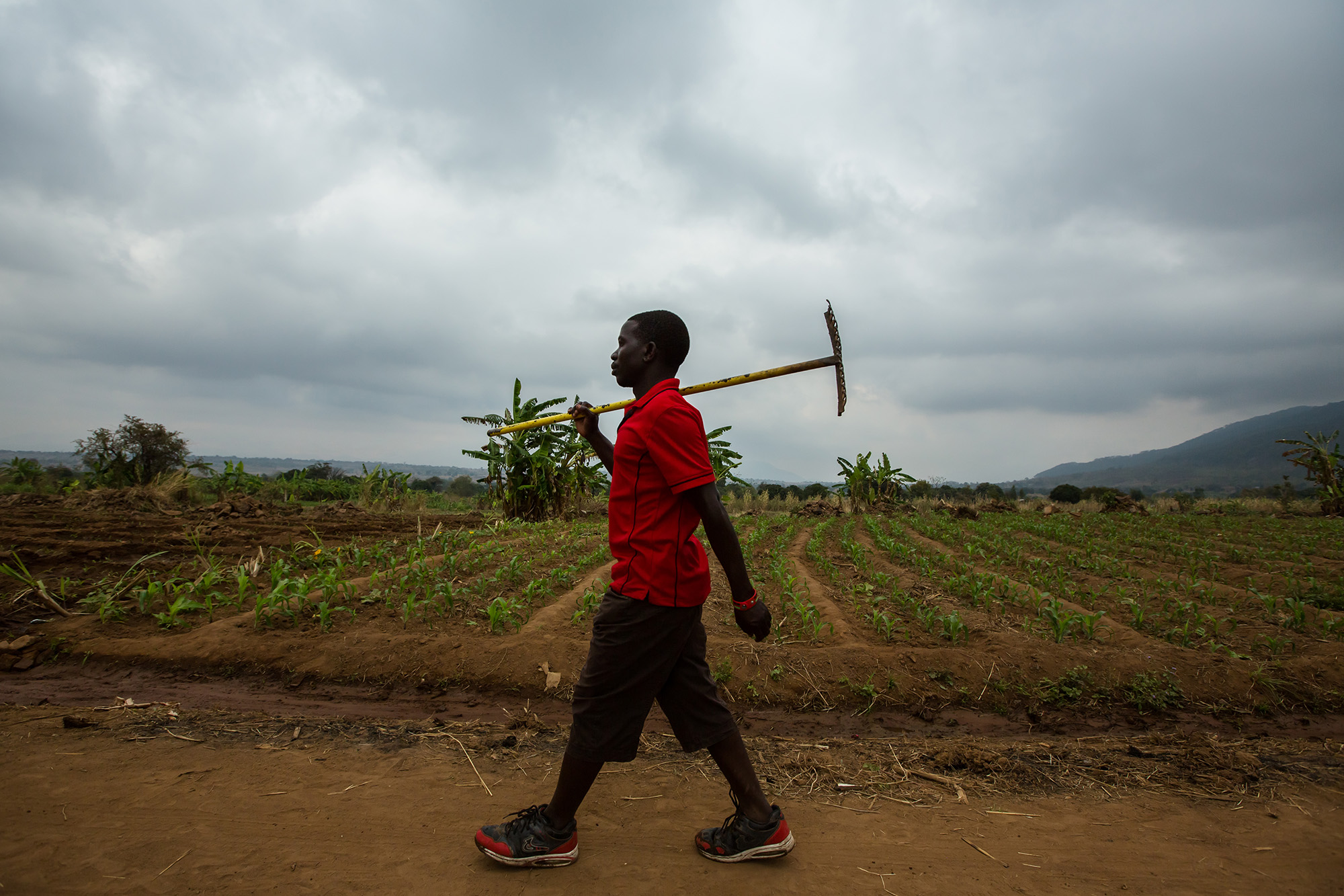 Wilfred walks from his home to work in the field.Photo by Morgana Wingard.
