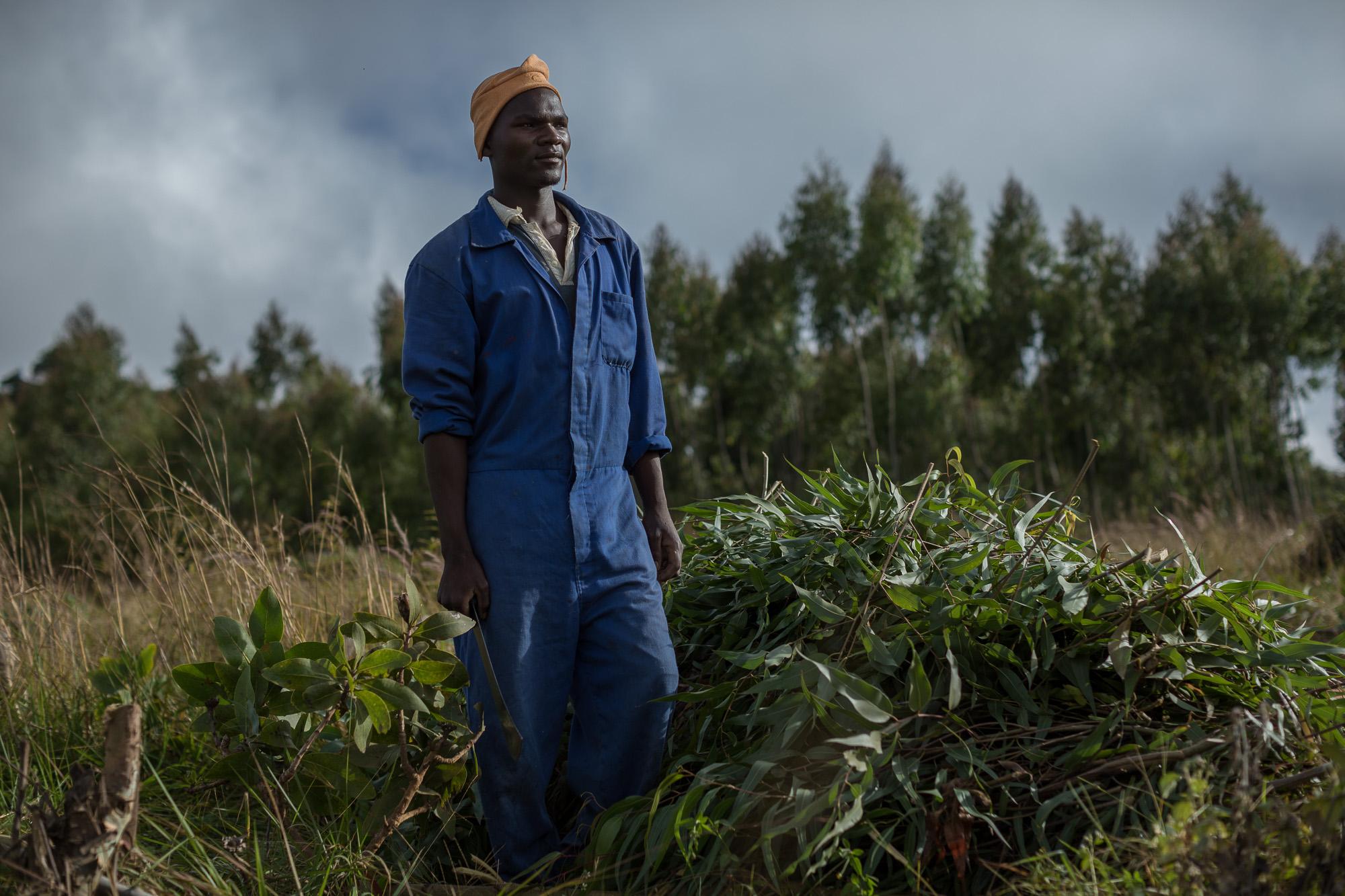 Whiton Zimba, a worker at Kawandama Hills Plantation (KHP)