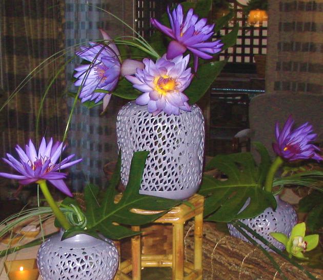 6mich cohen lotus.jpg