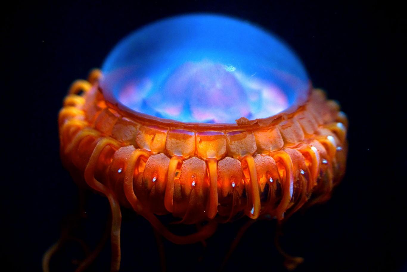 life_in_the_abyss_by_alien_dreams-d48ulu2.jpg