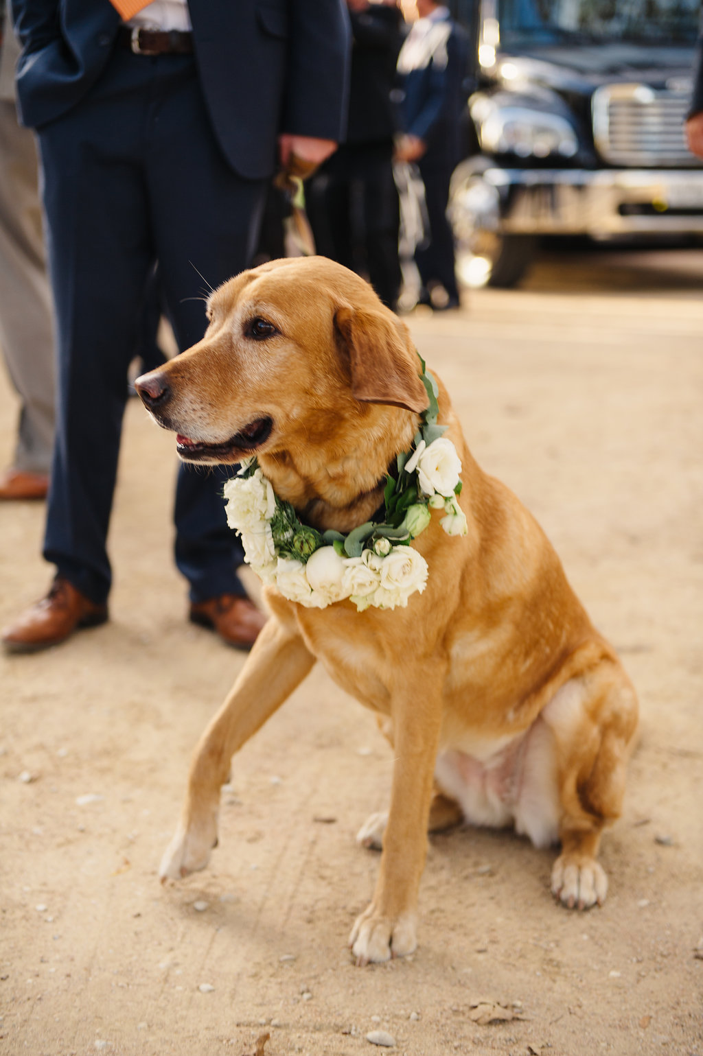 Lyons Events Wedding Dog