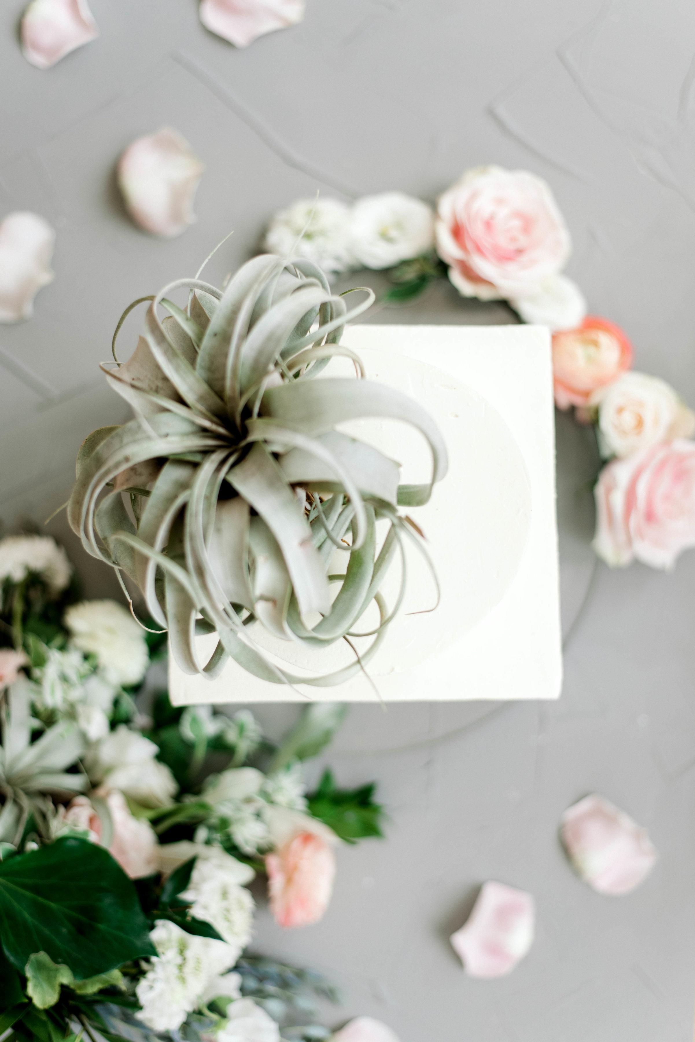 Lyons-Events-Hombre-Air-Plant-Wedding-Cake