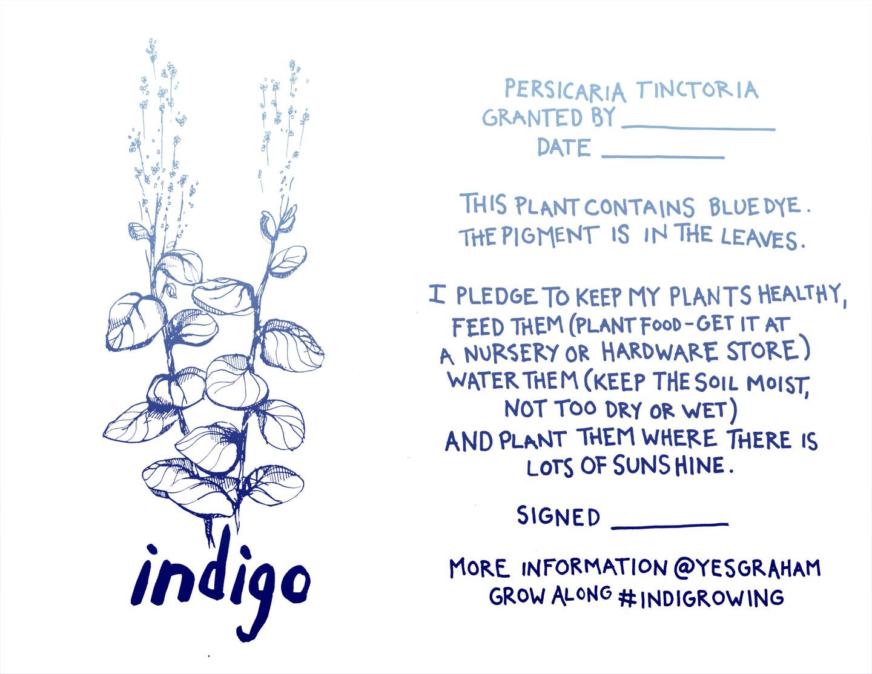 indigo seedling care pledge graham keegan